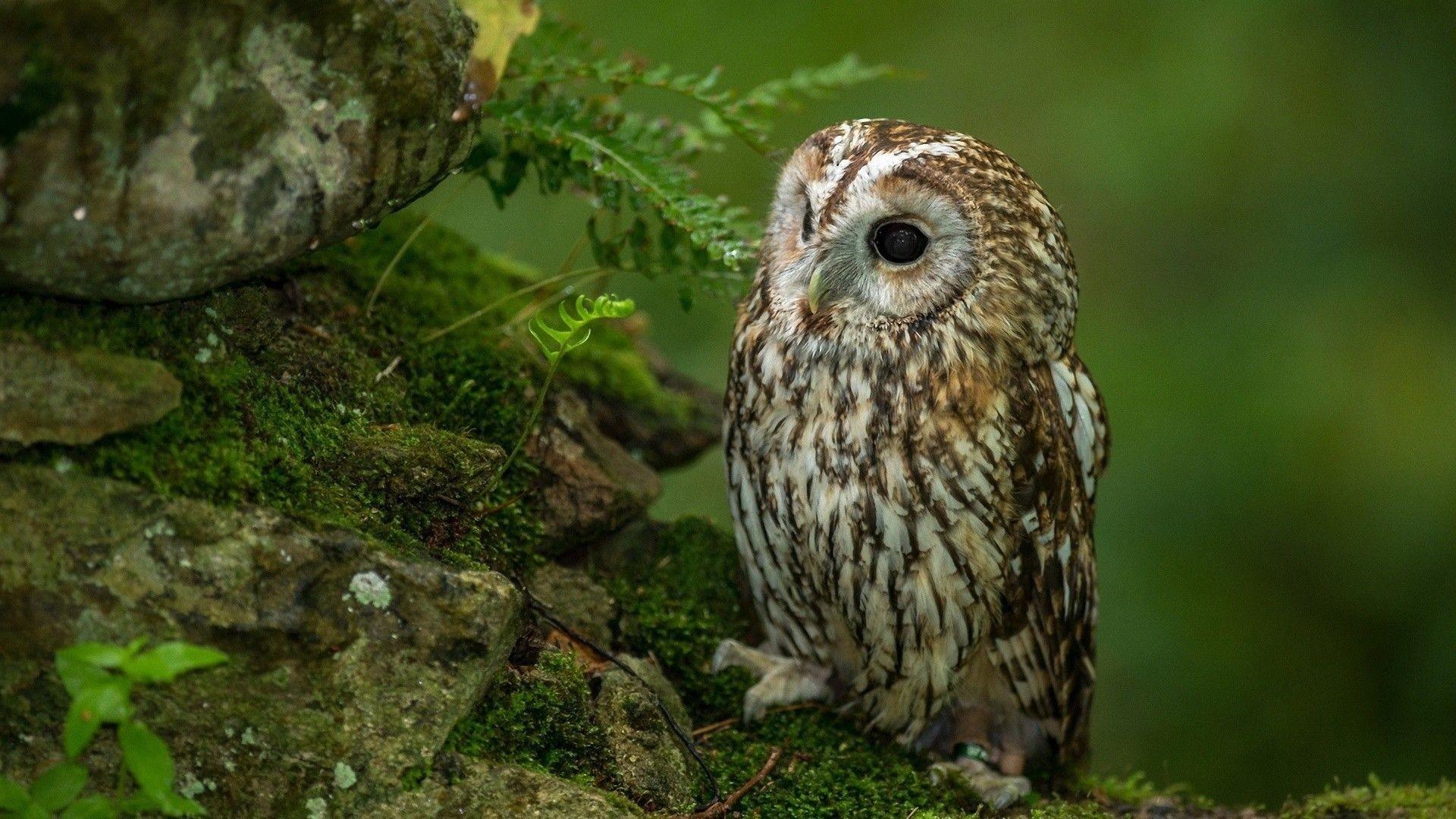 Res: 1920x1080, cute-baby-owl-wallpaper-bd-cute-baby-owl-