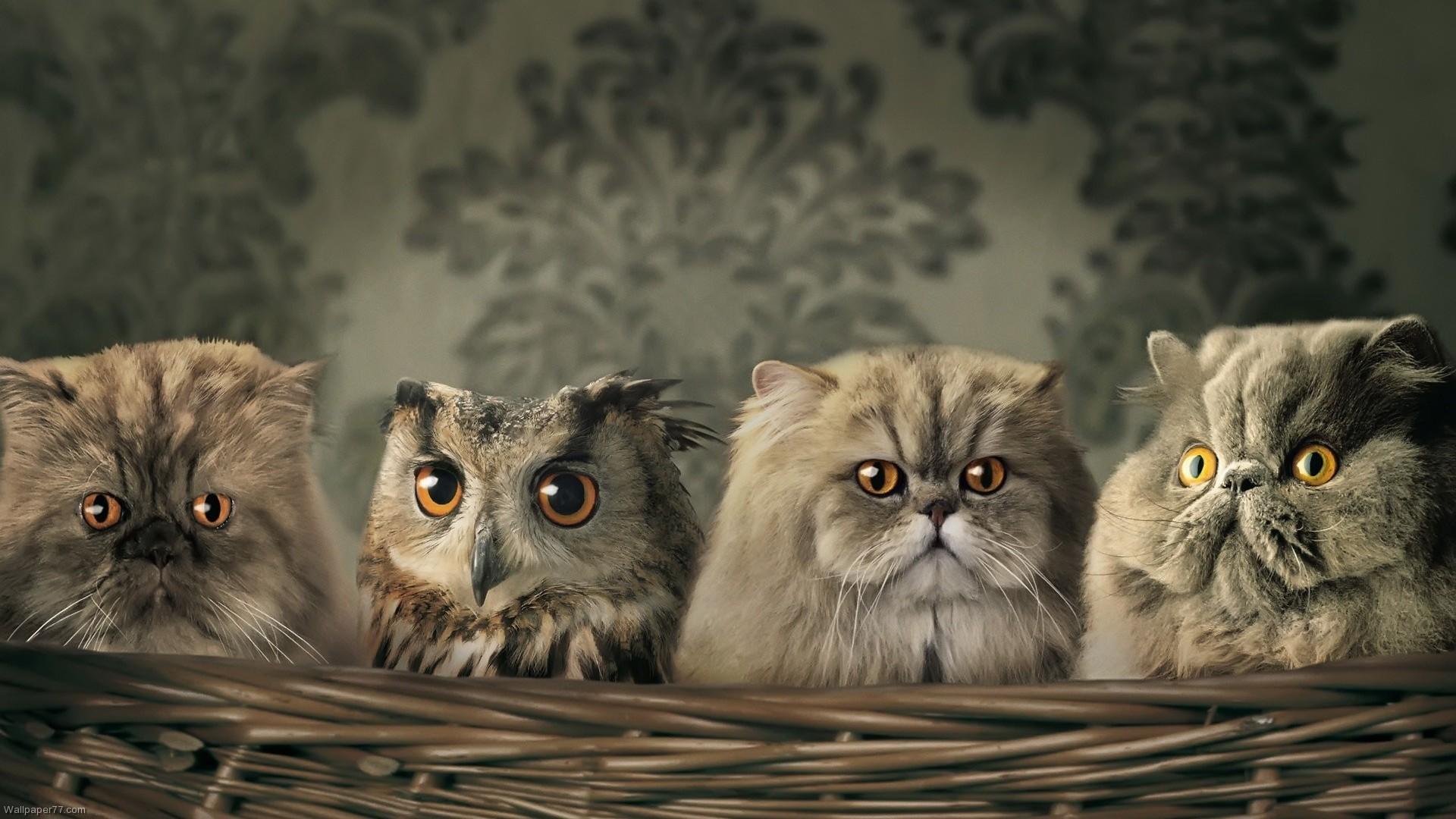 Res: 1920x1080, Cute Baby Owl Wallpaper – Resolution: , Tosha Hock