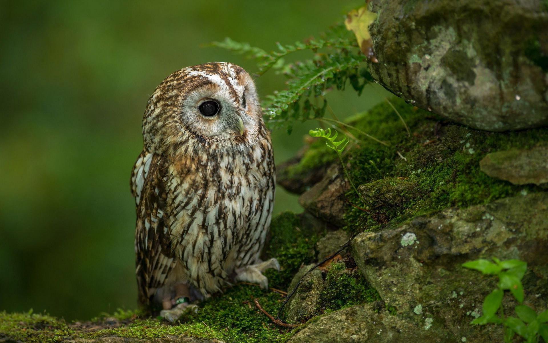 Res: 1920x1200, Cute owl HD Wallpaper 1920x1080 Cute owl HD Wallpaper