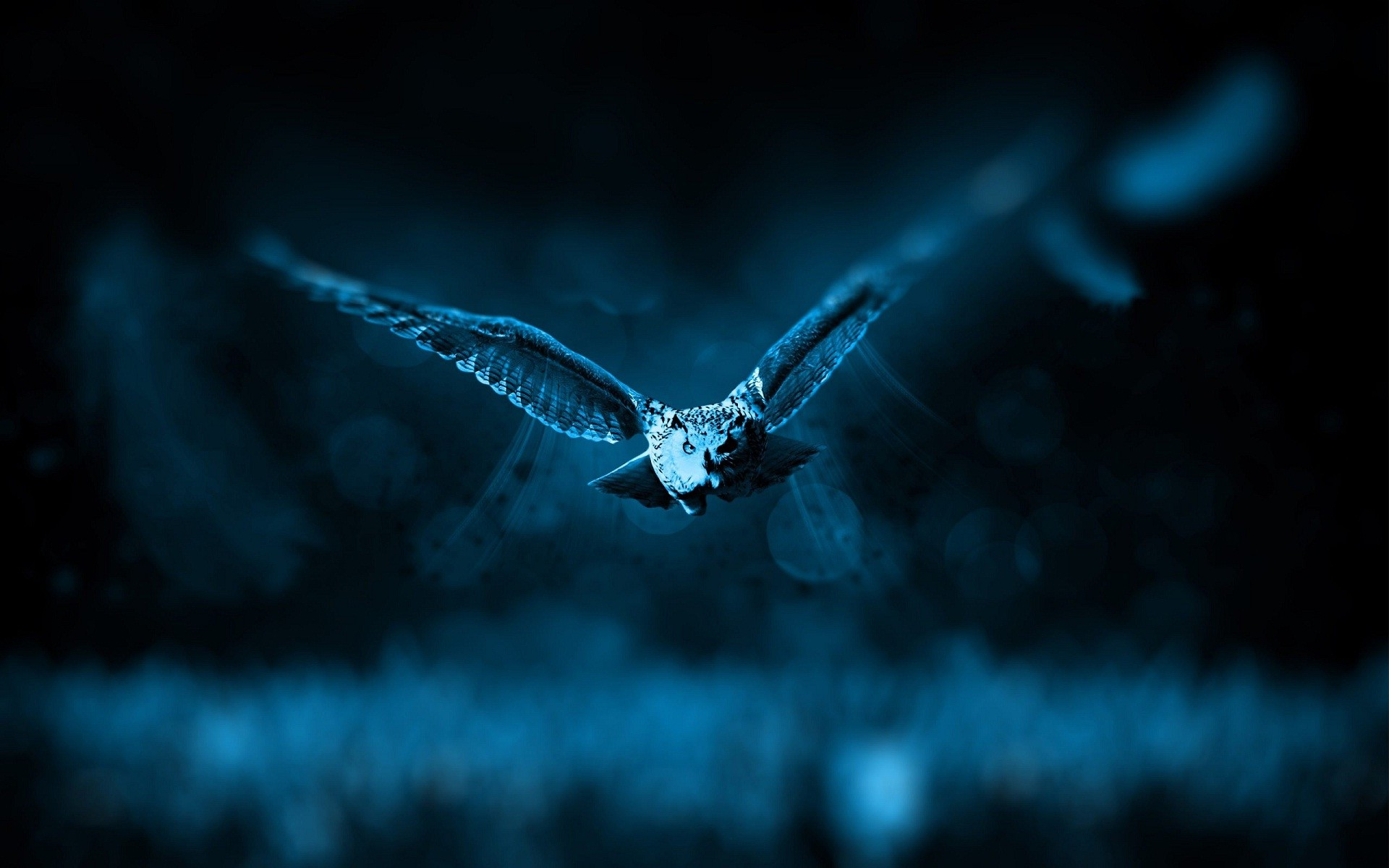 Res: 1920x1200, Cute owl bird night HD wallpaper