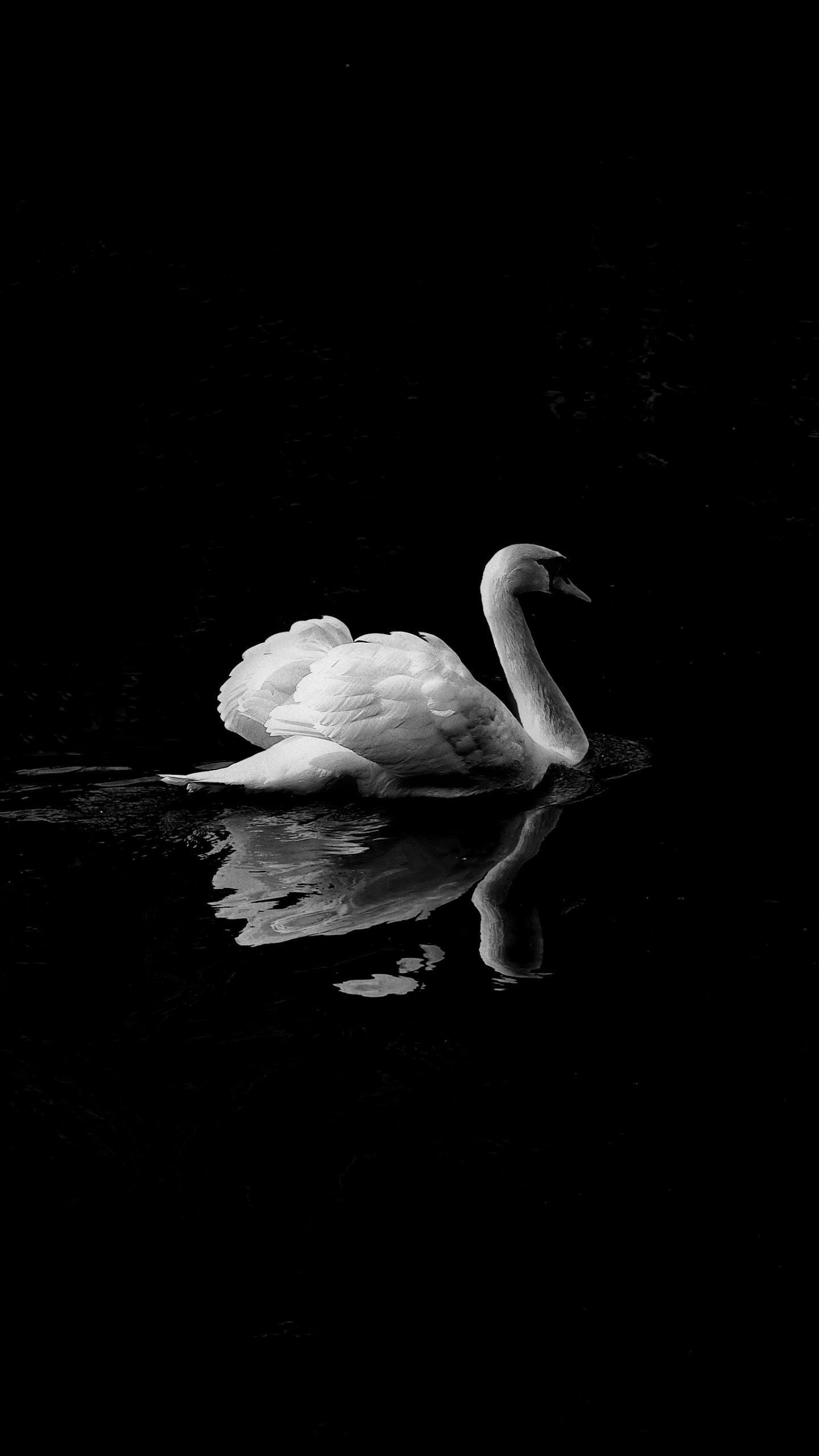 Res: 1440x2560, Swan in Lake