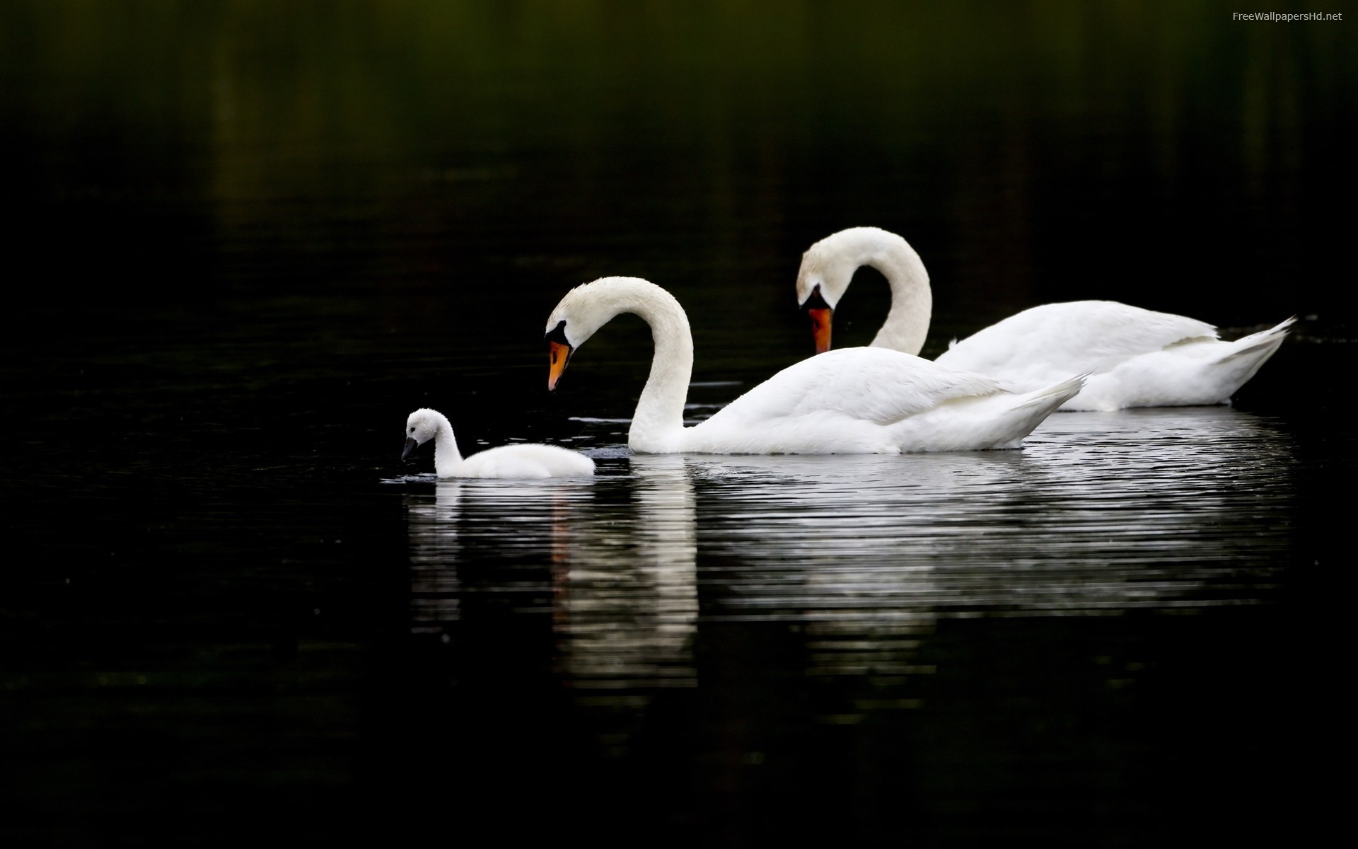 Res: 1920x1200, Swan
