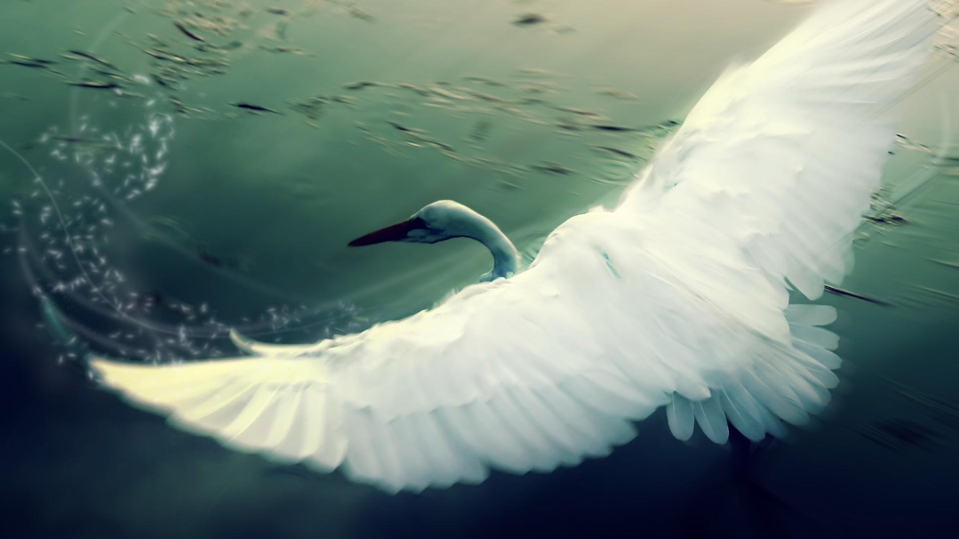 Res: 1920x1080, Animals / Swan Wallpaper