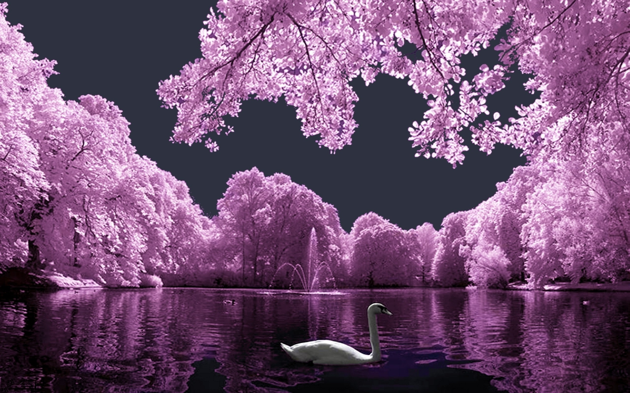 Res: 2560x1600, Pink Landscape With White Swan Wallpaper