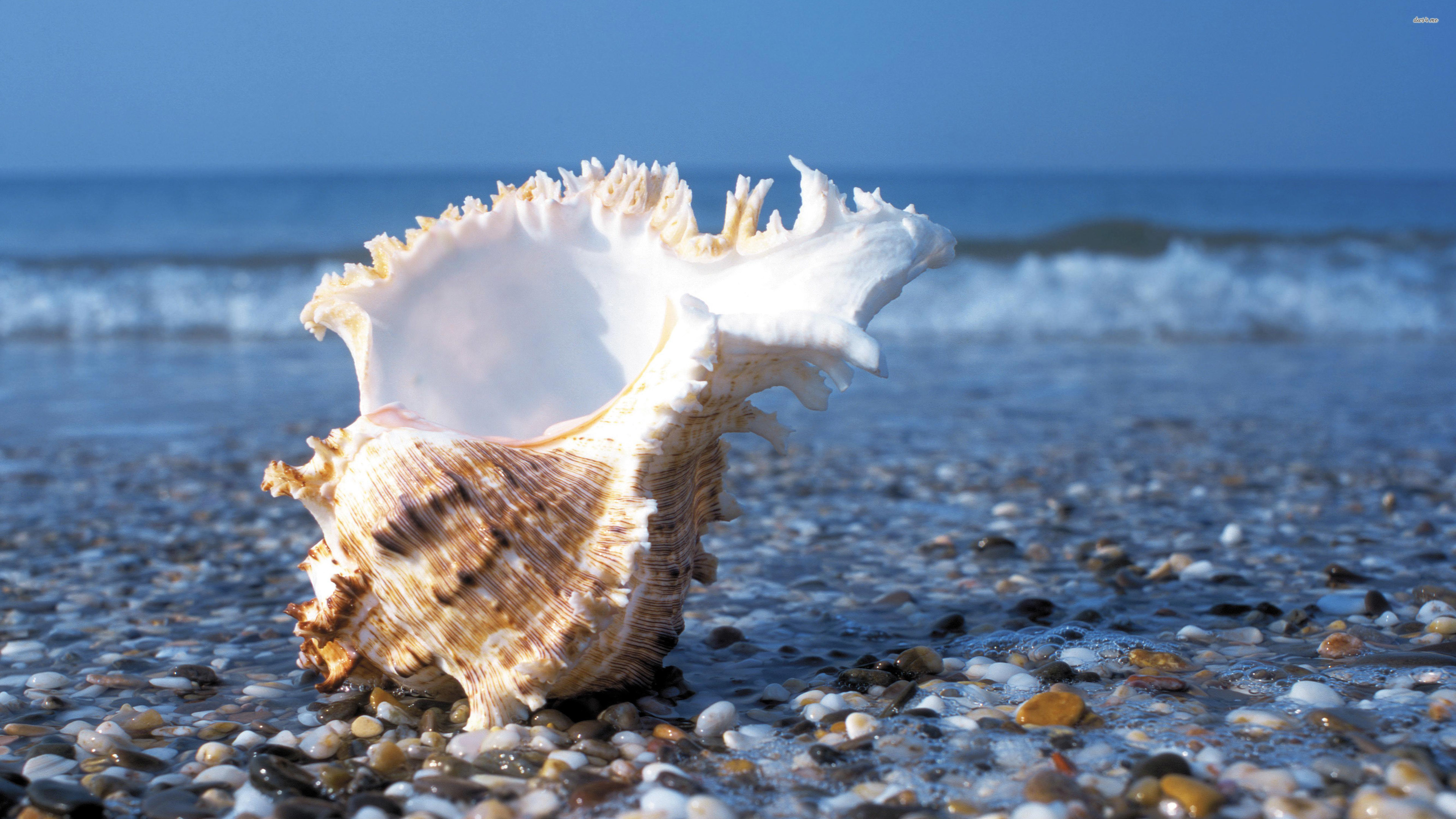 Res: 3840x2160, ... Shell on a pebble beach wallpaper  ...