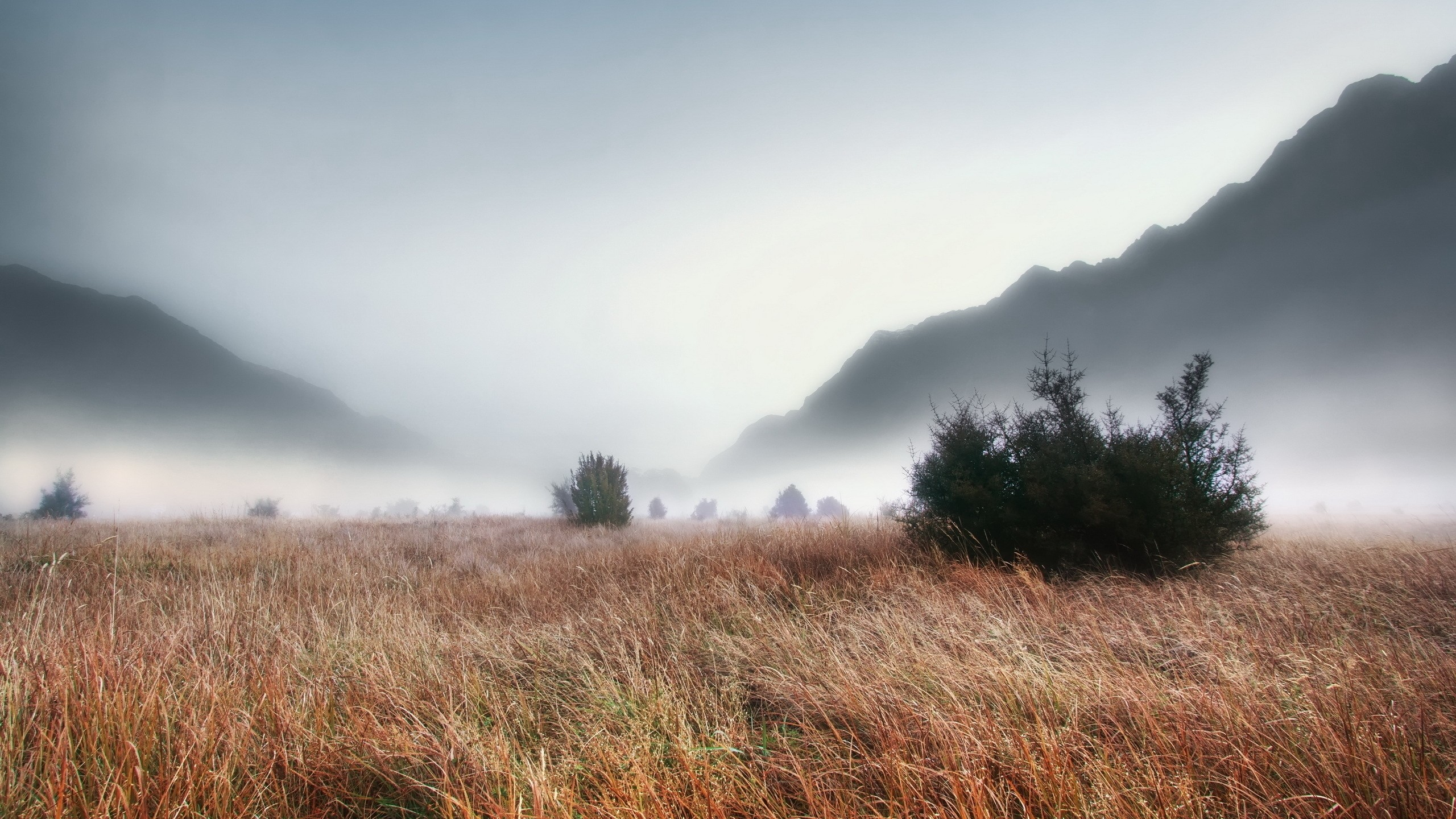 Res: 2560x1440, ... dense-mountain-fog-wallpaper-1.jpg ...