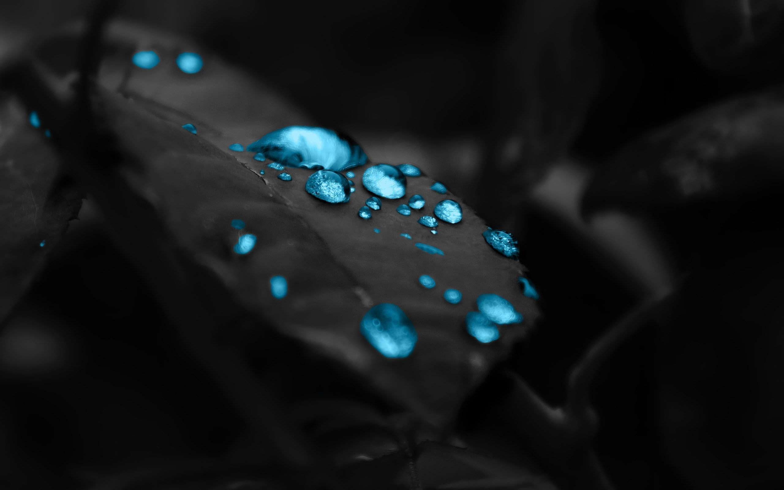 Res: 2560x1600, The Leaves Dew Mac HD Wallpaper Photography, Amazing, Wallpapers, HD,  Beautiful,