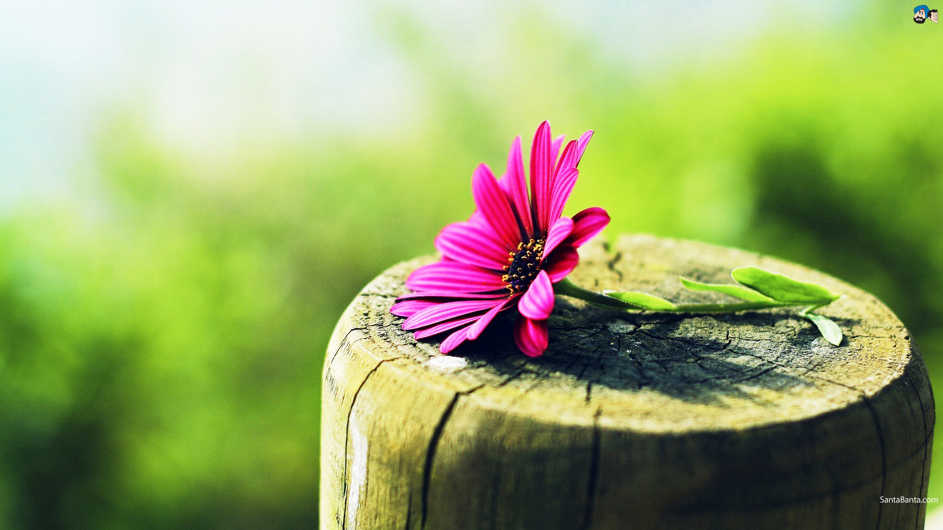 Res: 1920x1080, 4. flower-photography-wallpaper7-600x338