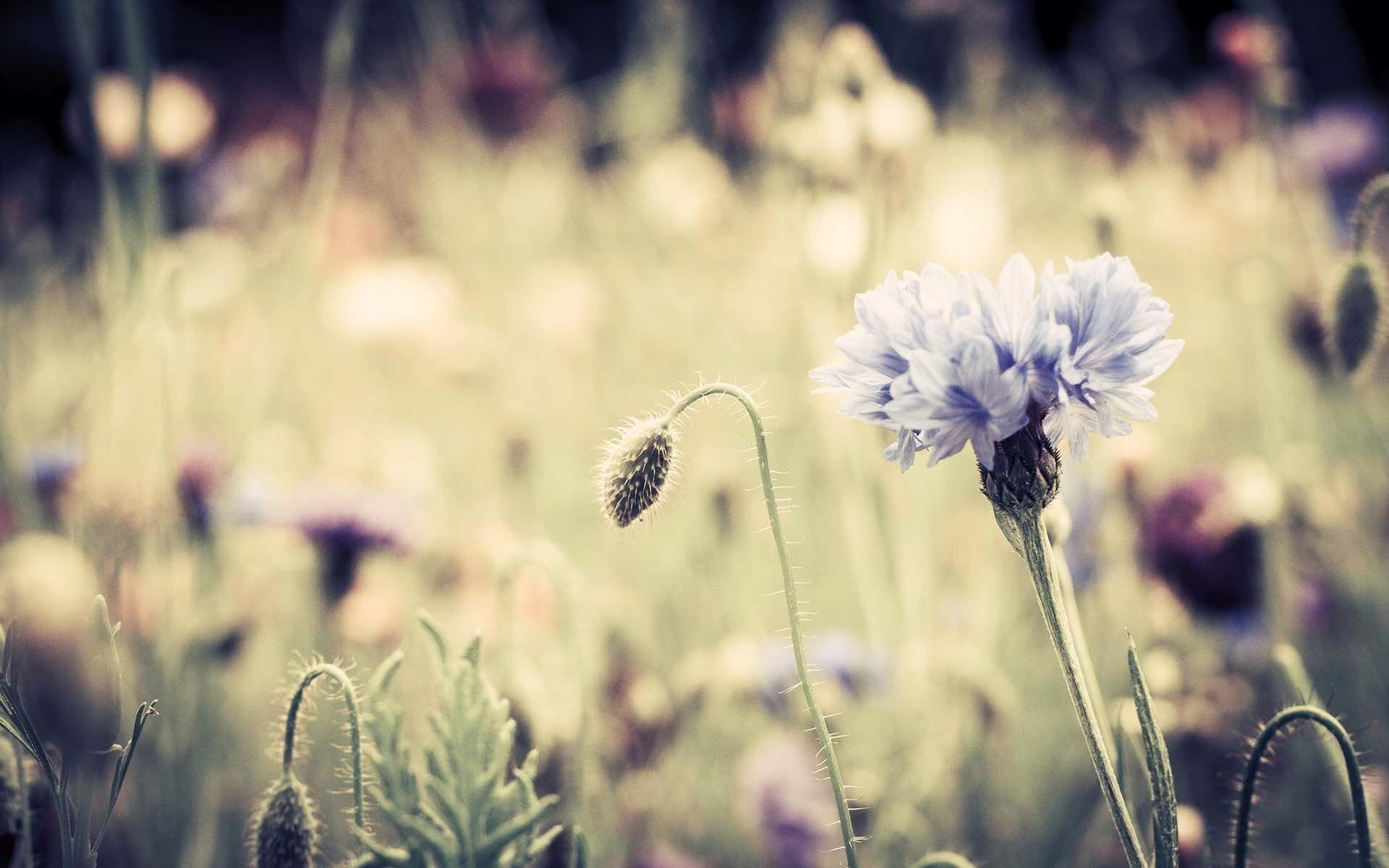 Res: 1920x1200, Photo-3d-Flowers-3d-wallpapers-for-desktop-hd-
