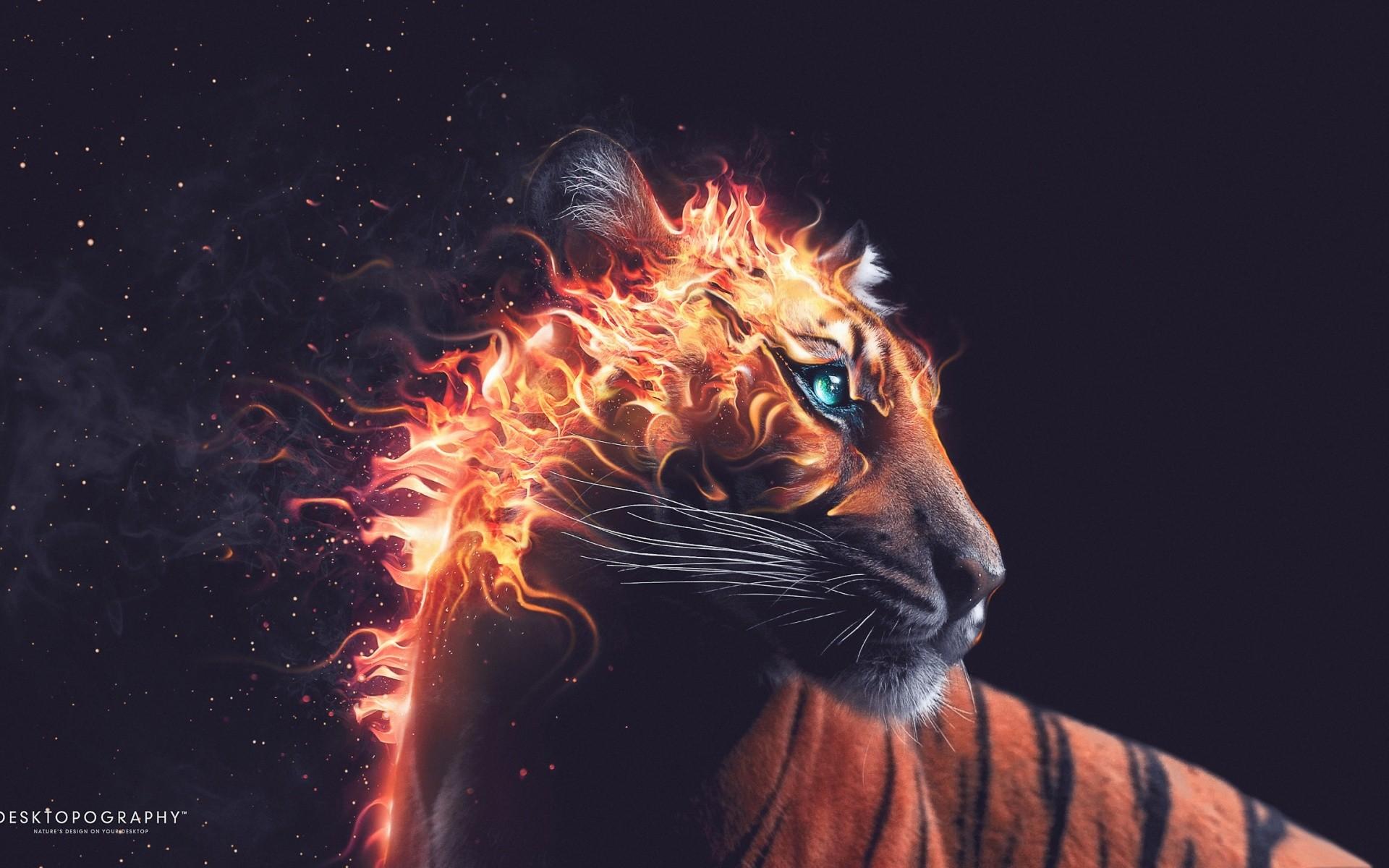 Res: 1920x1200, Tiger Fire Wallpaper