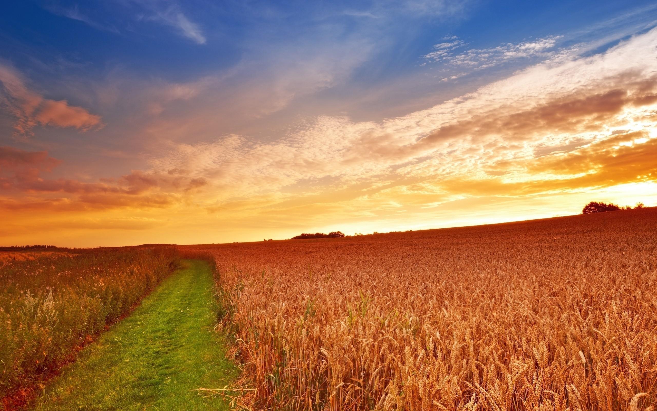 Res: 2560x1600, Farming Wallpaper HD.