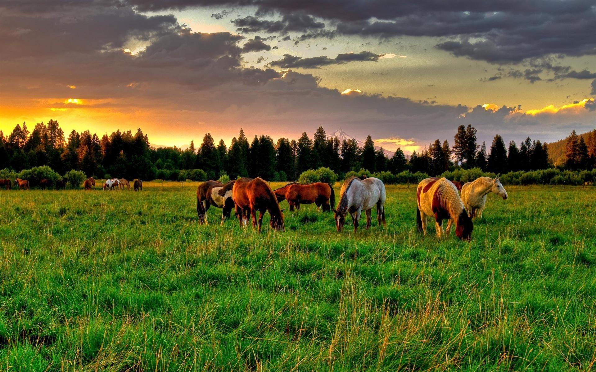 Res: 1920x1200, horse-farm-hd-wallpaper-download-horse-farm-images-free