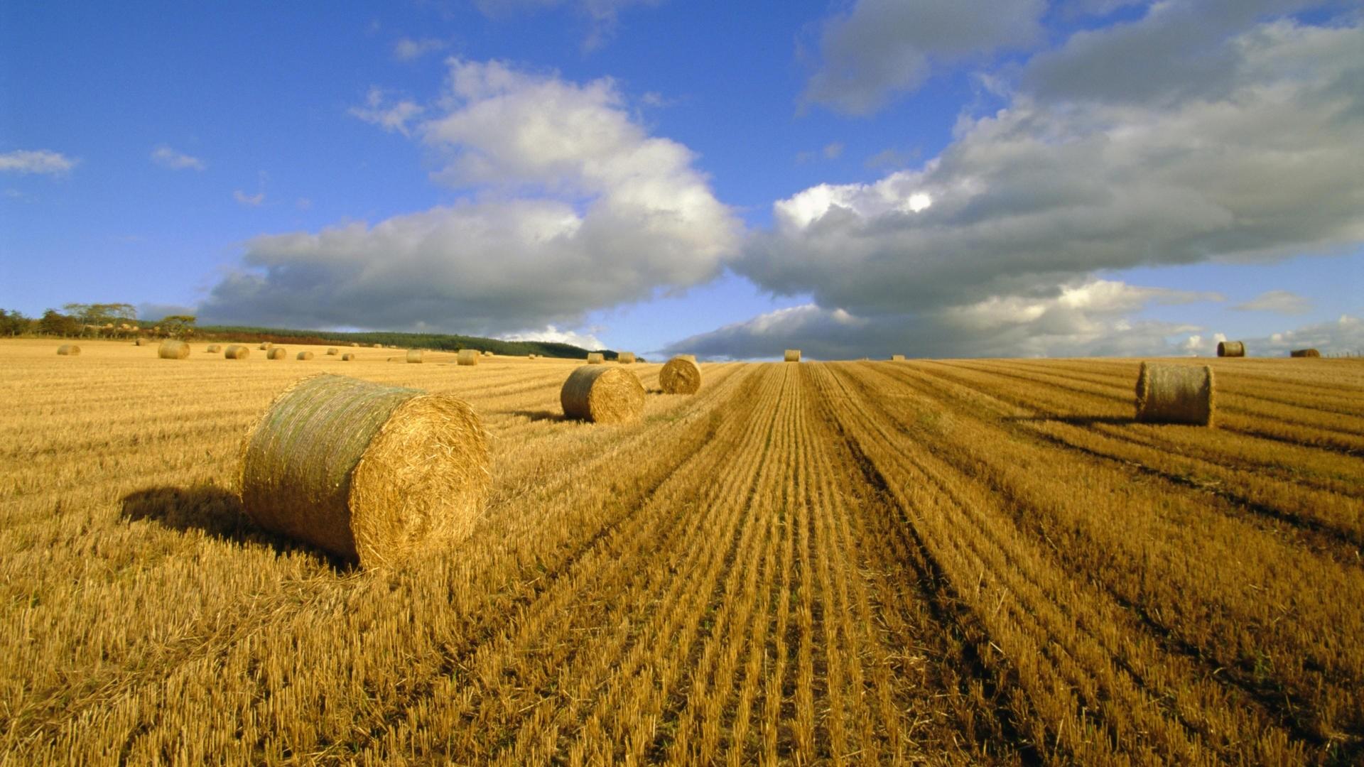 Res: 1920x1080, Superb Nature Wheat Farm Wallpaper