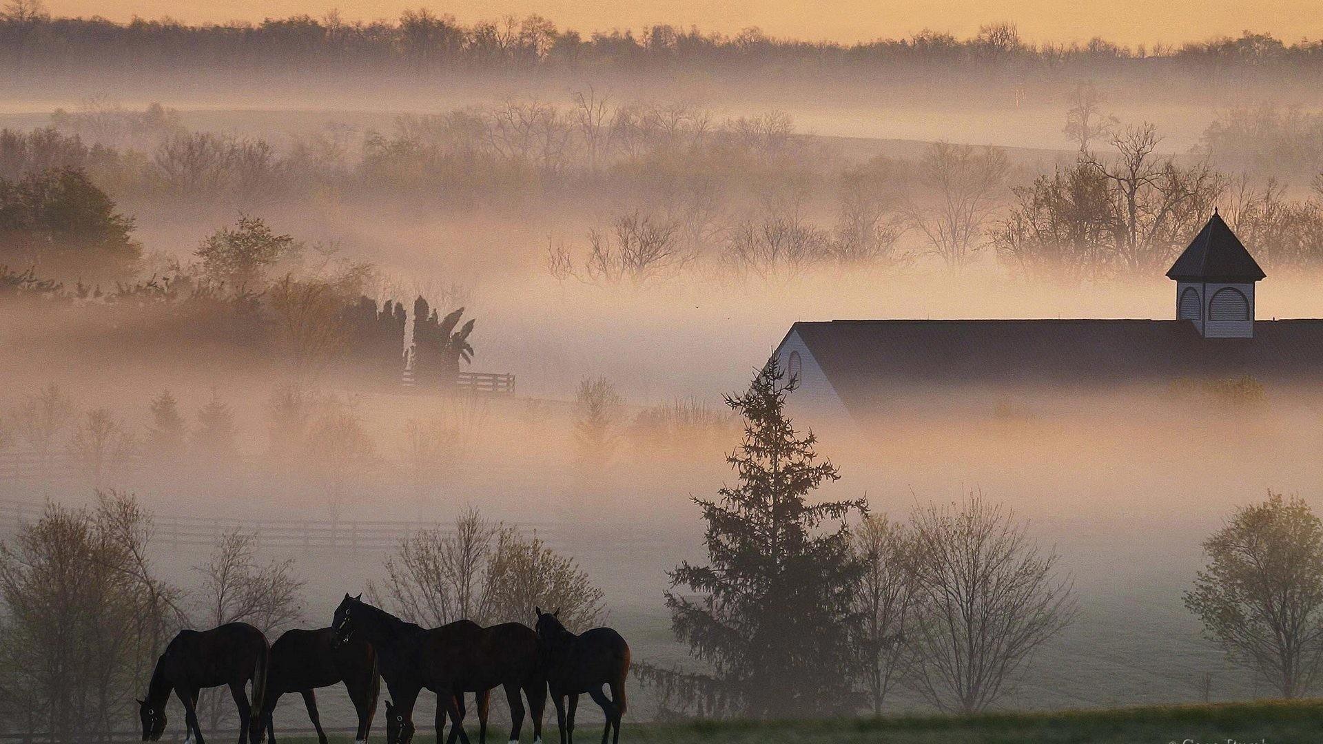 Res: 1920x1080, Barn Tag - Fog Buildings Sunset Barn Sunrise Farm Horses Trees Rustic Wild  Animals Hd Photos