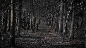 Creepy Forest wallpapers