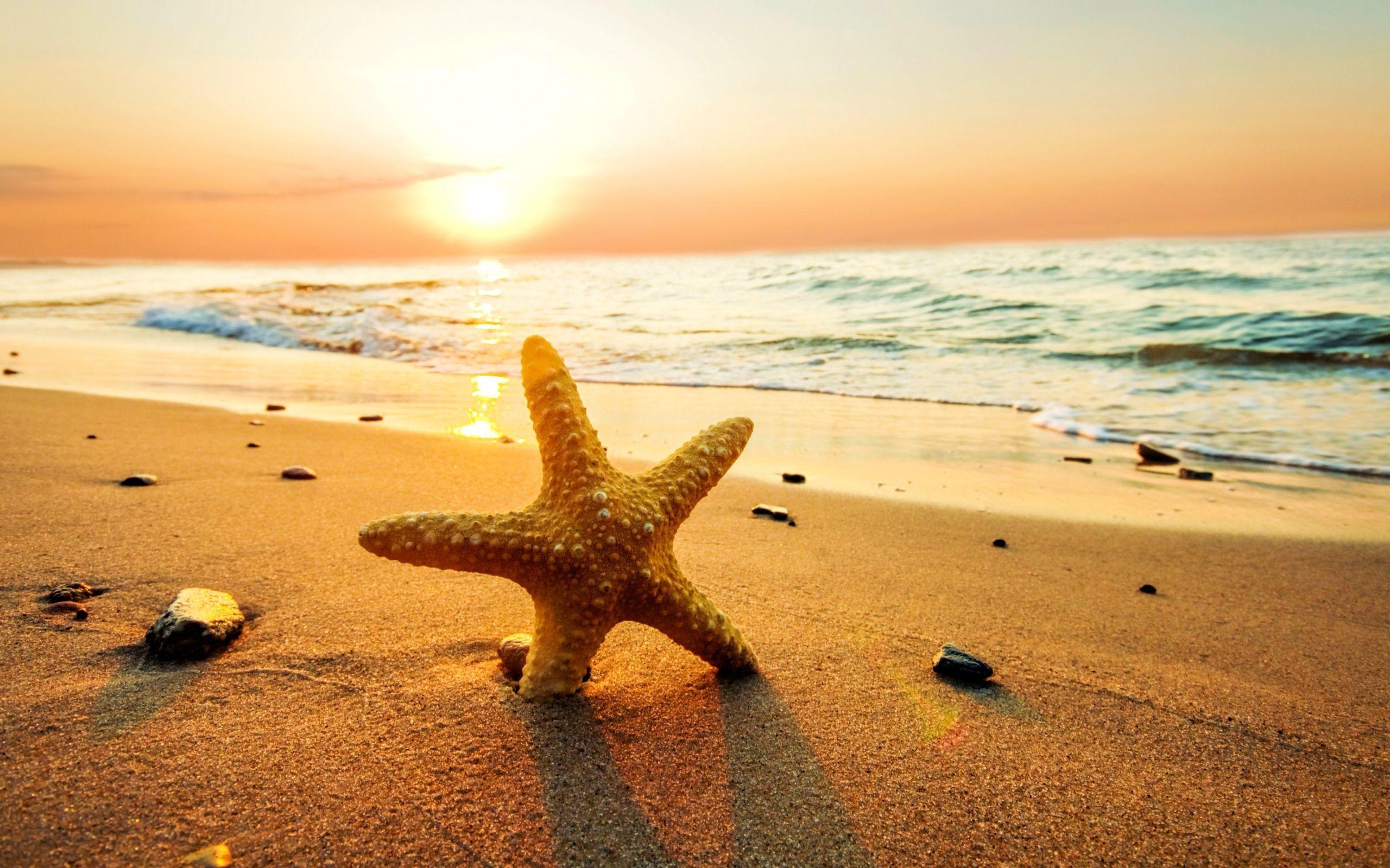 Res: 2560x1600, Summer Sunset Wallpaper