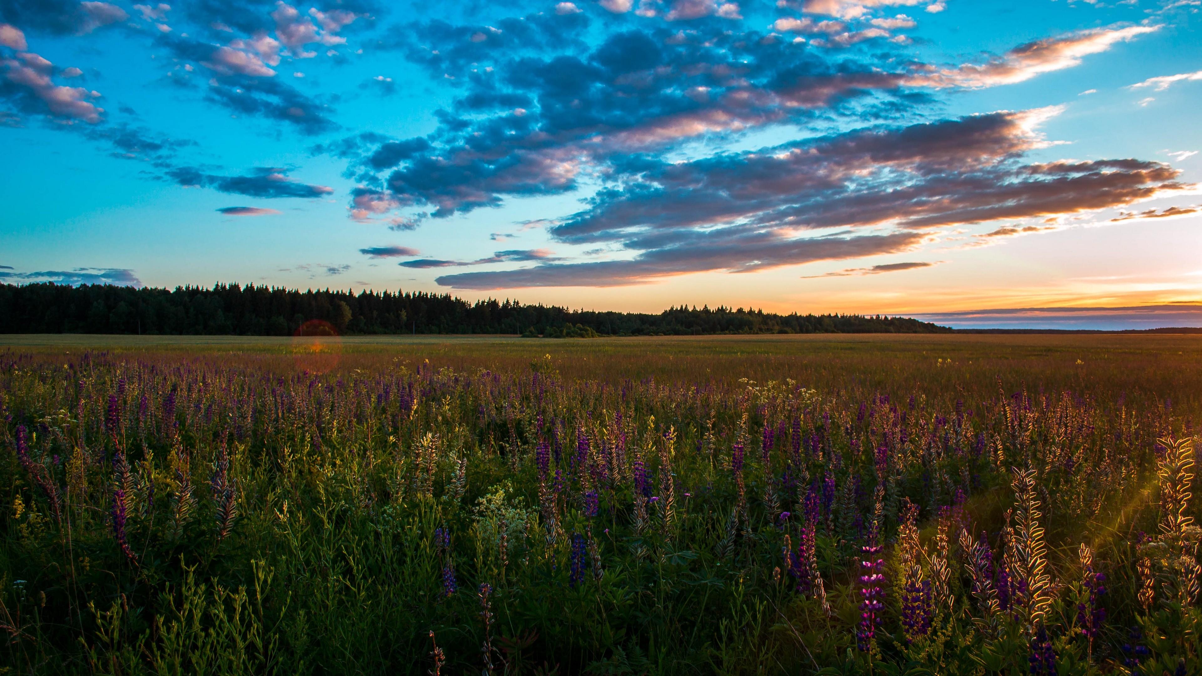 Res: 3840x2160,  Wallpaper field, grass, sky, summer, sunset