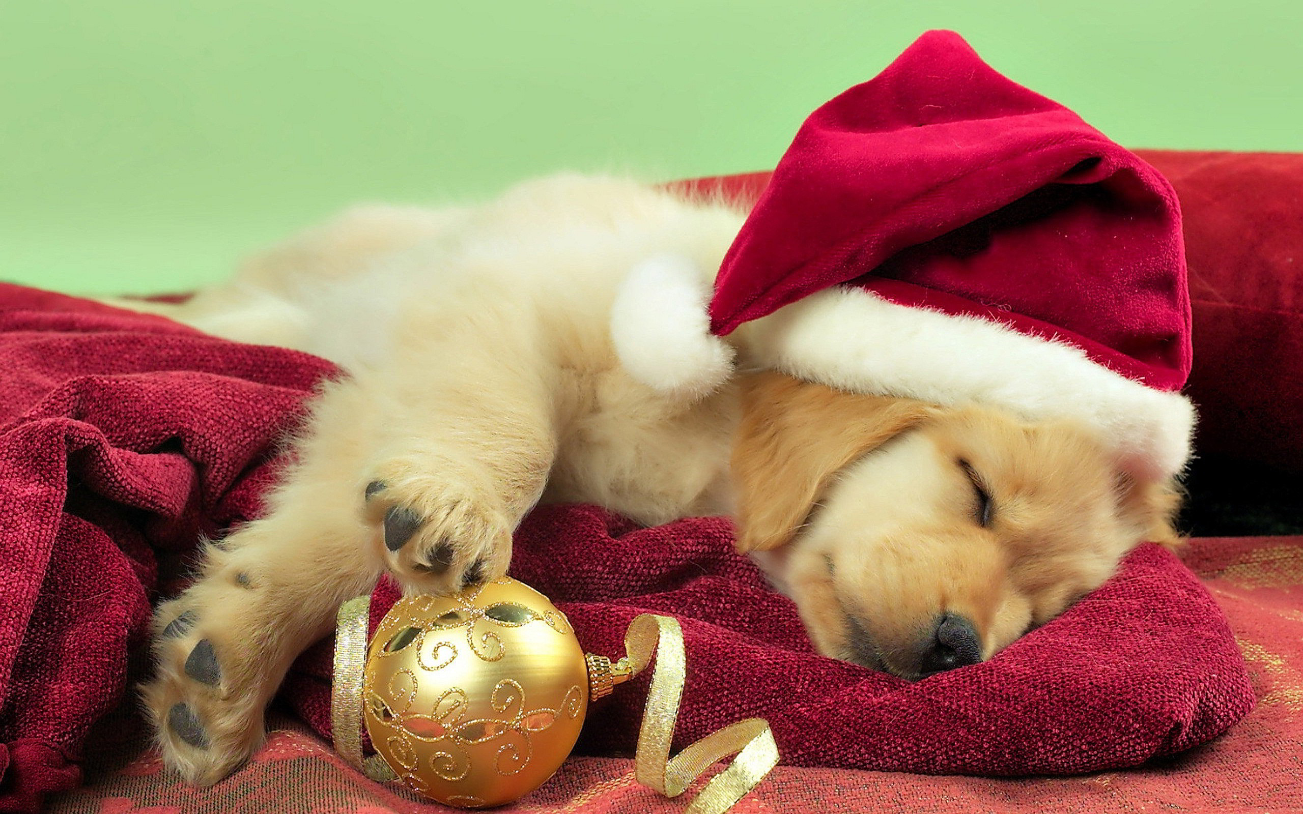 Res: 2560x1600, Christmas Puppy Gift HD Desktop Wallpaper, Background Image