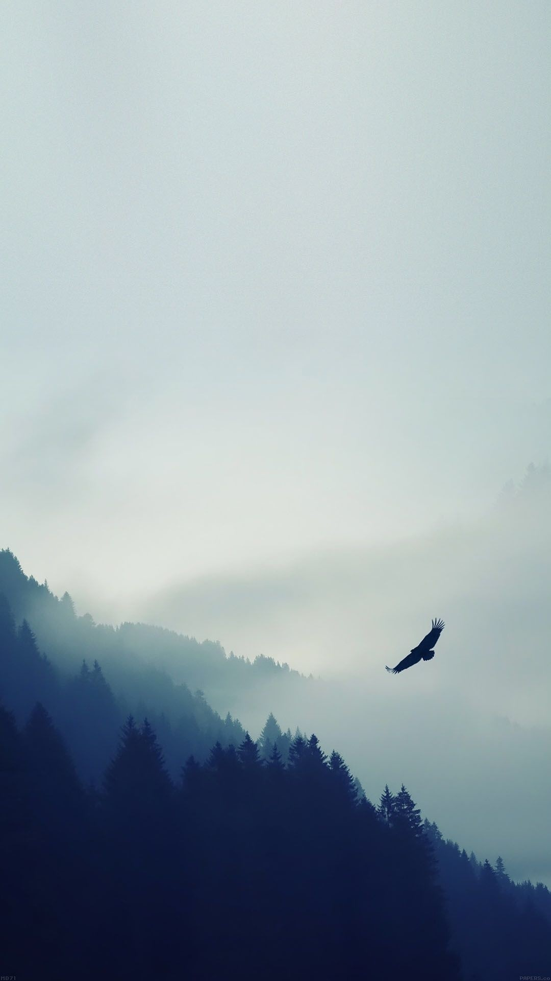 Res: 1080x1920, Bird Flying Over Foggy Forest iPhone 6 Plus HD Wallpaper