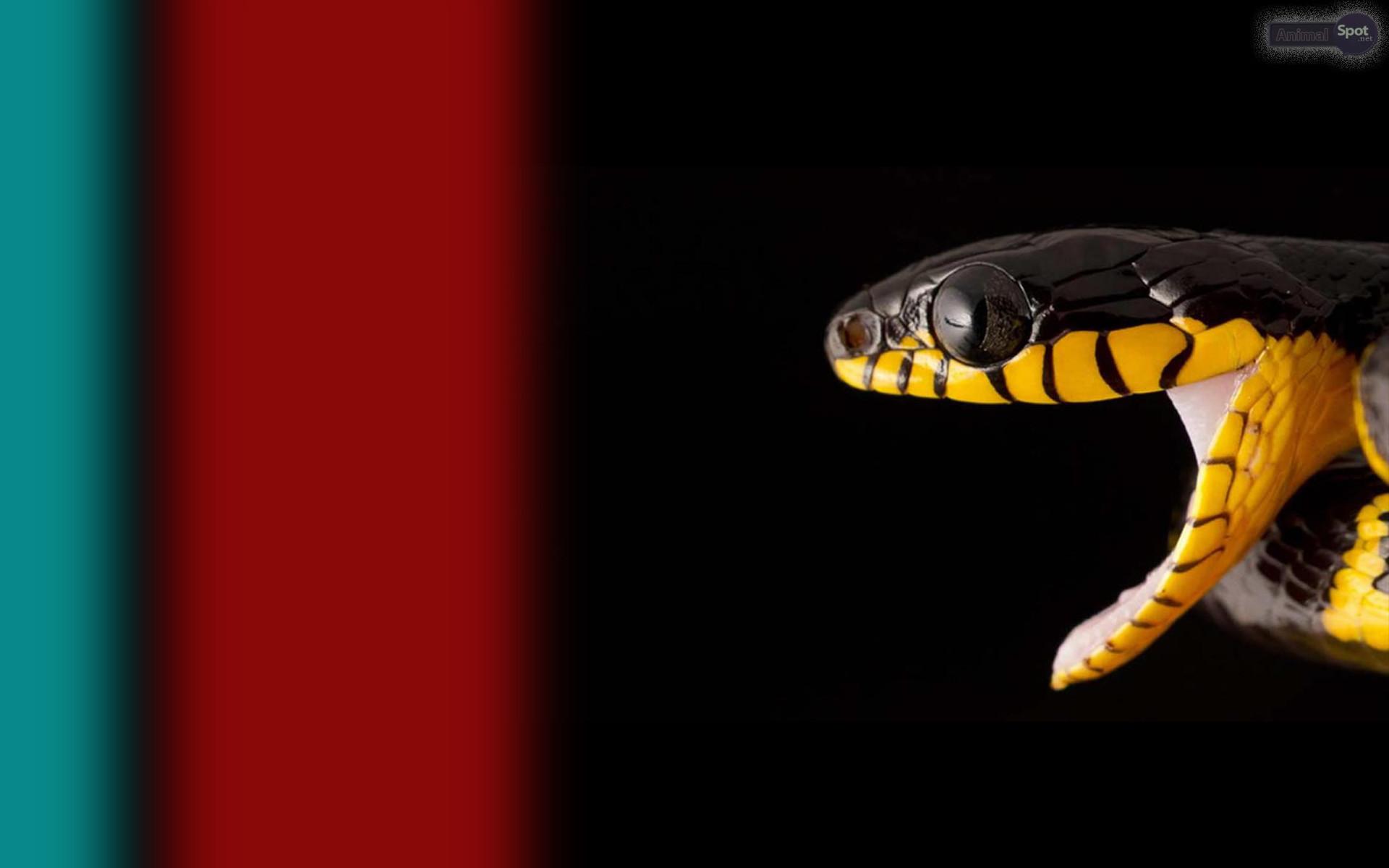 Res: 1920x1200, Snake Eyes Wallpaper
