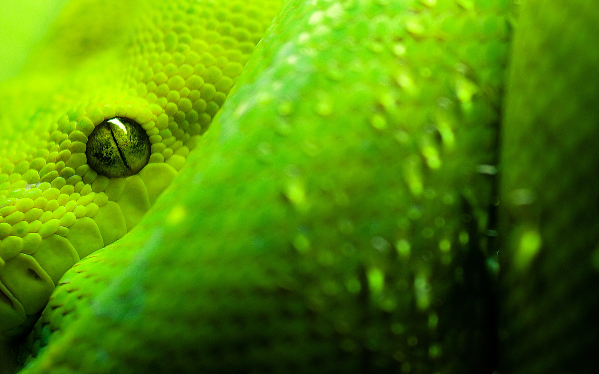 Res: 1920x1200, Author: Grimnar. Tags: Great Eyes Snake