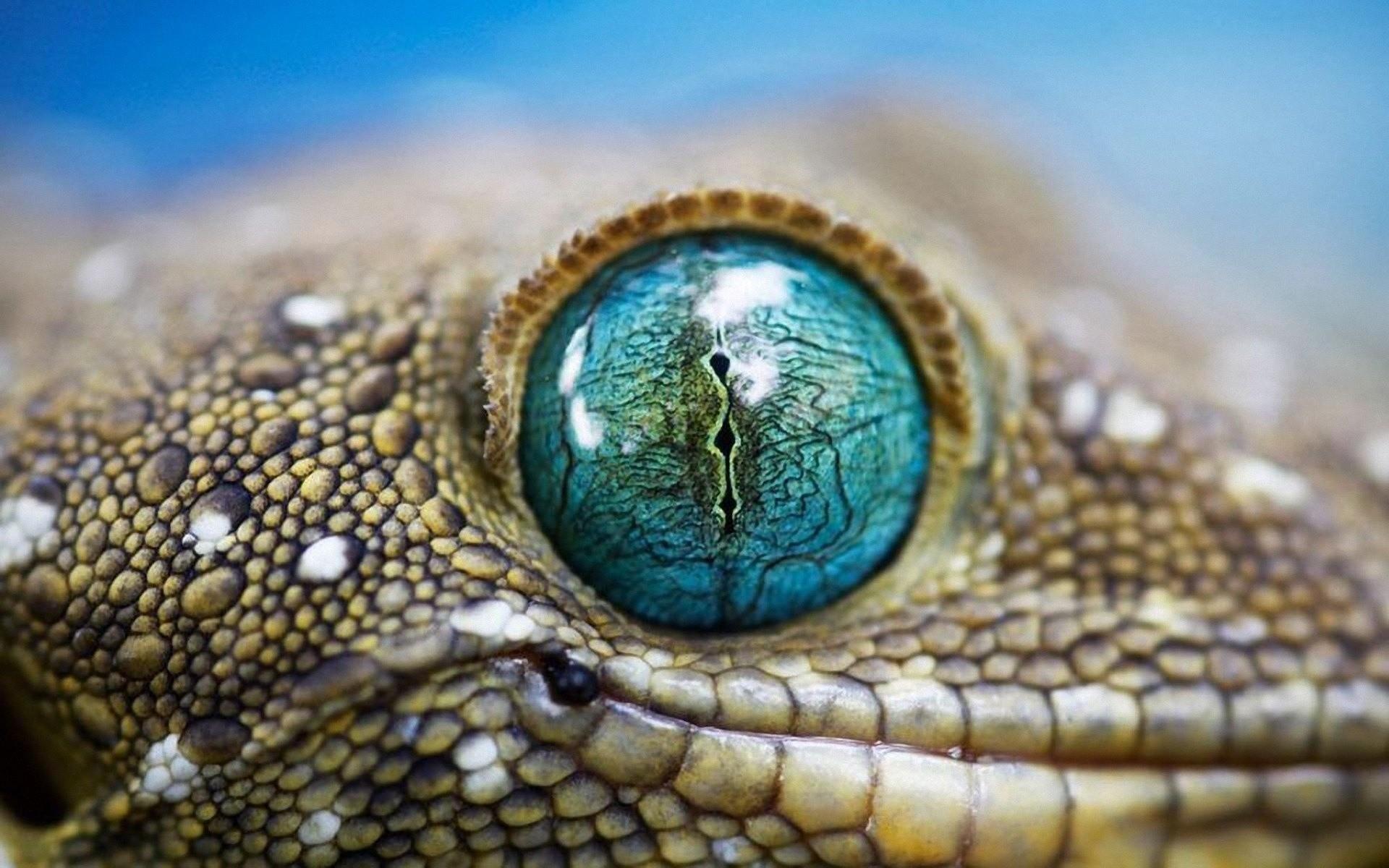 Res: 1920x1200, Leather, Snake, Eyes, Macro