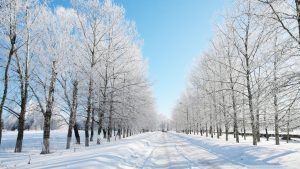 Snow Desktop wallpapers