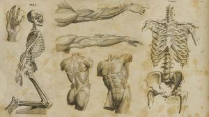 Human Anatomy wallpapers