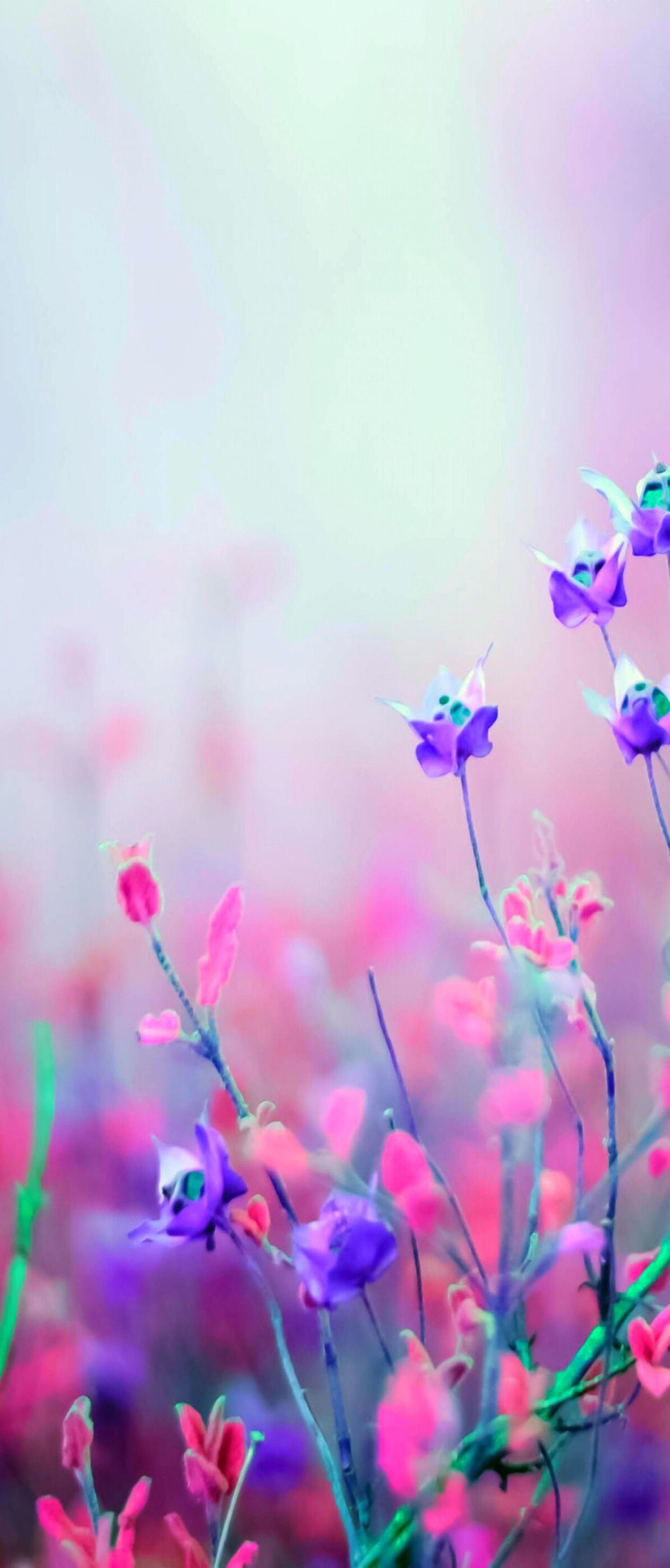 Res: 1242x2908, Floral, silver, pink, nature, violet, wallpaper, pattern, galaxy,