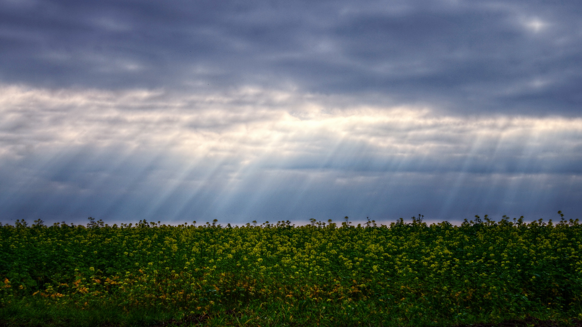 Res: 1920x1080, ... OliverBPhotography The Curtain Rises 16:9 Wallpaper 1080p by  OliverBPhotography