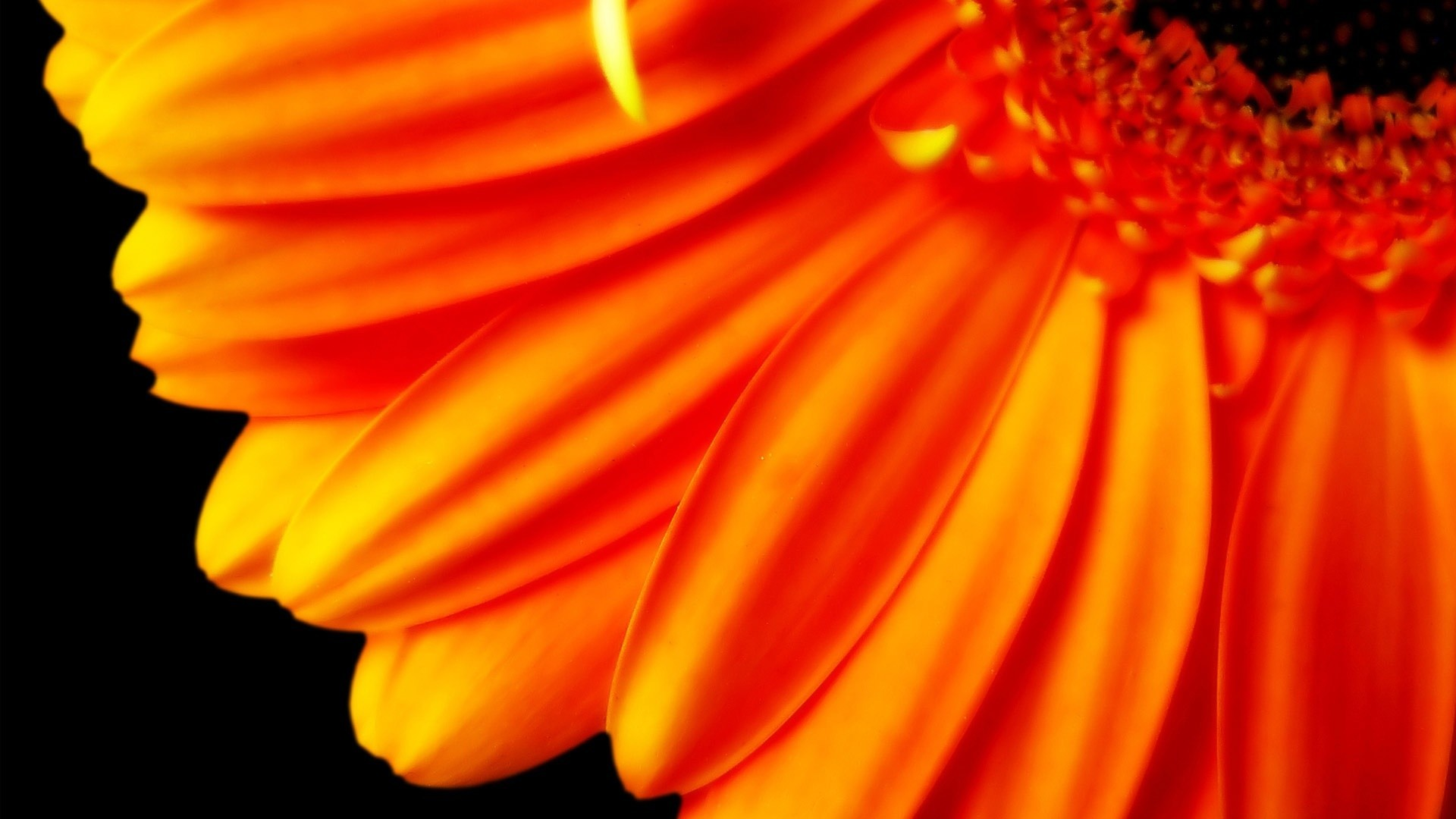 Res: 1920x1080,  Pure Orange Flower 1080p Wallpapers