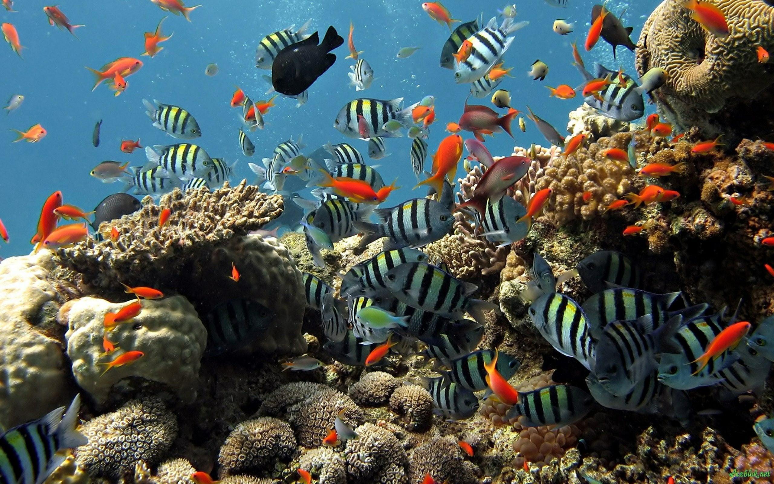 Res: 2560x1600, Free Live Hd Wallpaper Aquarium 3d Desktop Aquarium 3d Mac Live Wallpaper  Download Desktop Aquarium 3d Mac Live Wallpaper Download