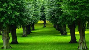 Background Trees wallpapers