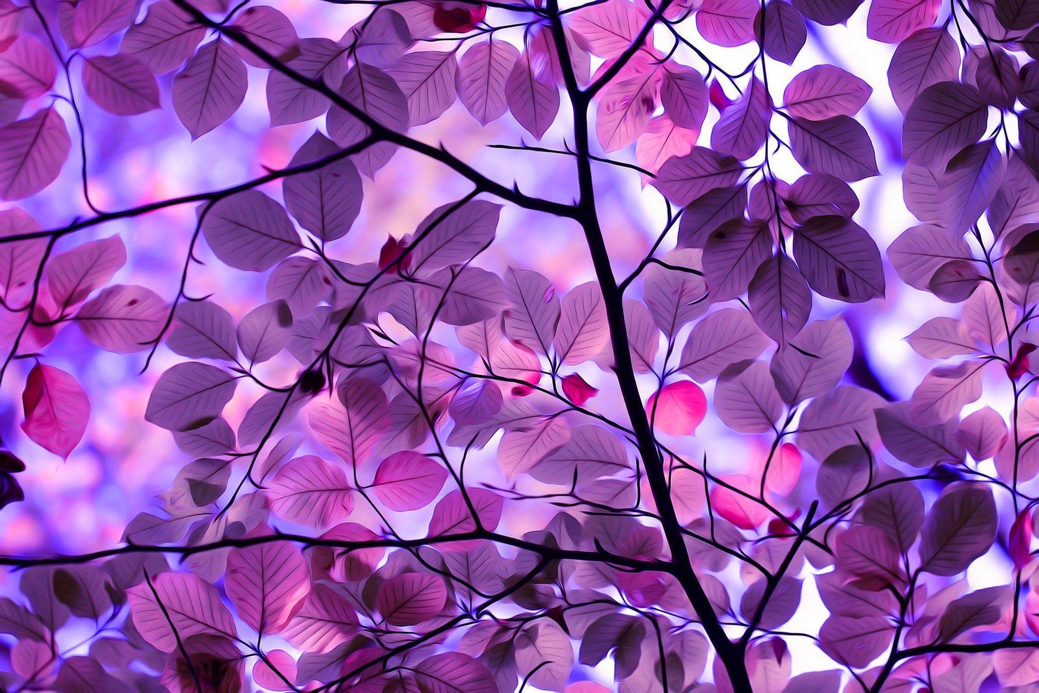 Res: 2048x1366, Purple-Leaves-Wallpaper-Free