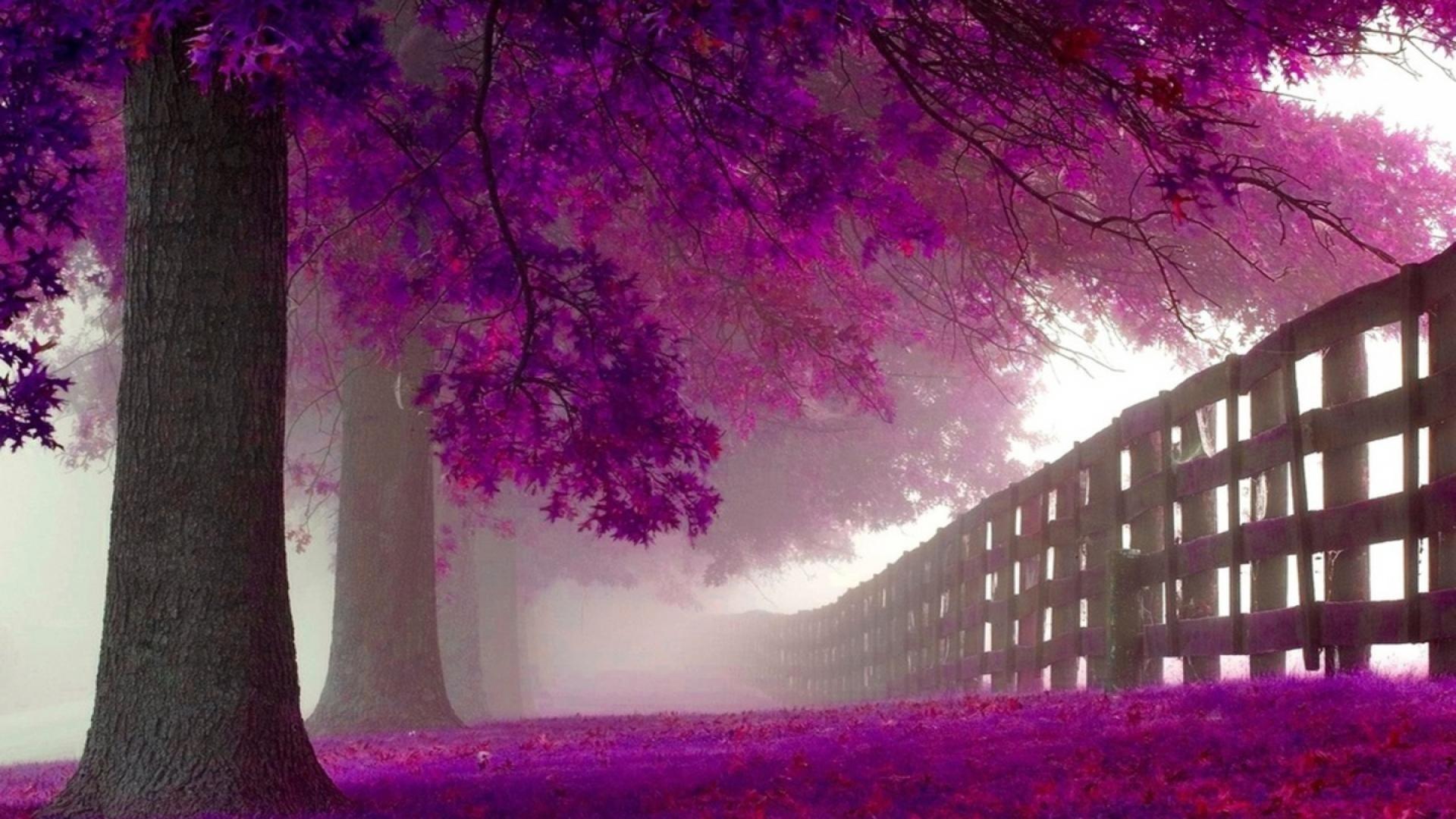 Res: 1920x1080, Purple Trees