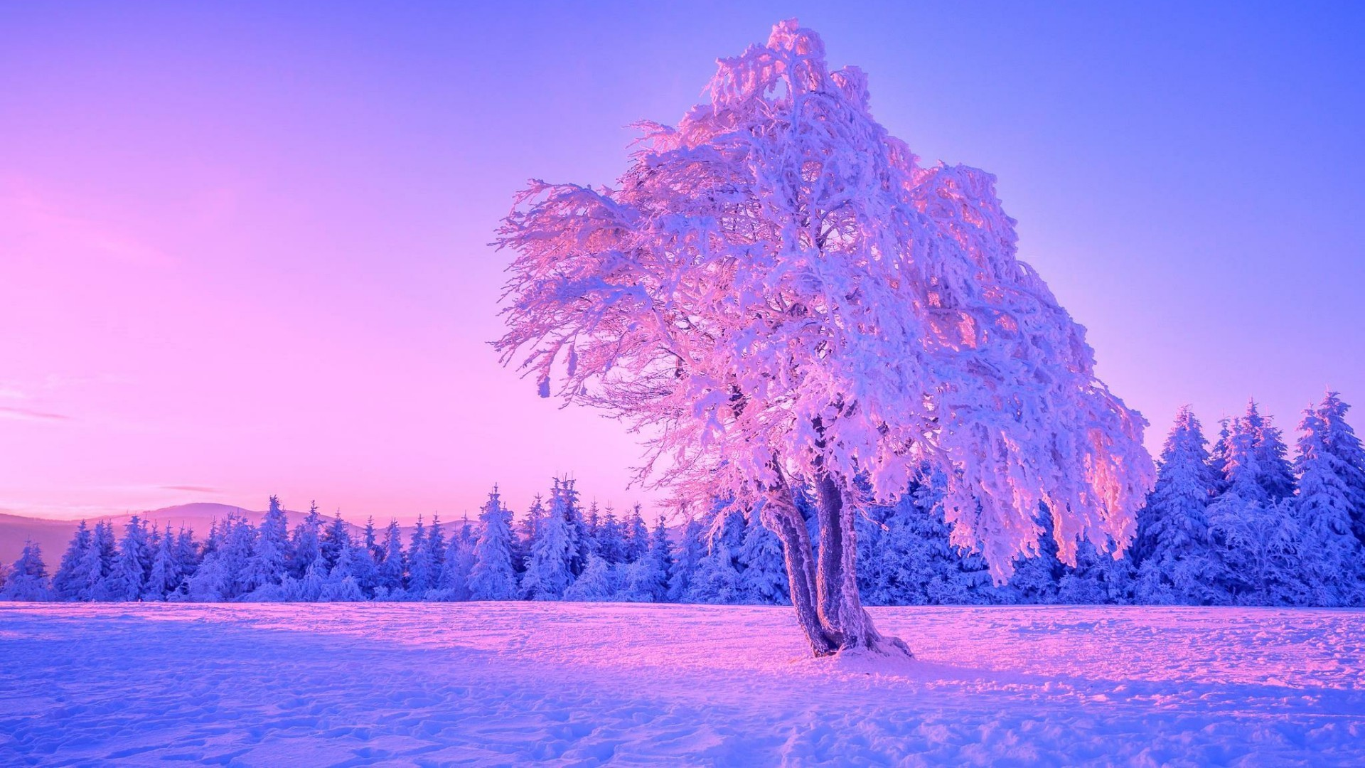 Res: 1920x1080, Frozen Lonely Tree Wallpaper | Wallpaper Studio 10 | Tens of thousands HD  and UltraHD wallpapers for Android, Windows and Xbox