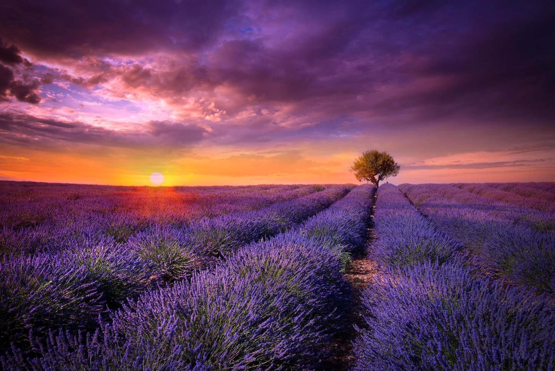 Res: 1920x1282, france provence the field lavender flower purple tree sun sunset