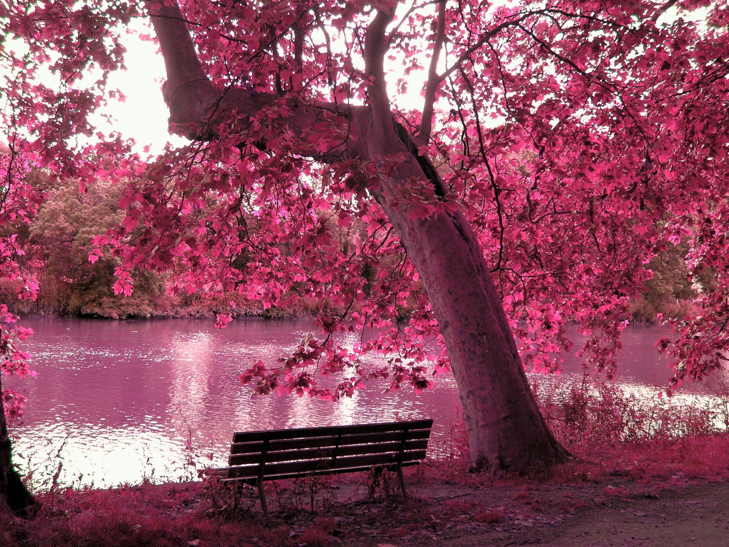 Res: 2560x1920, Trees purple bench lakes wallpaper