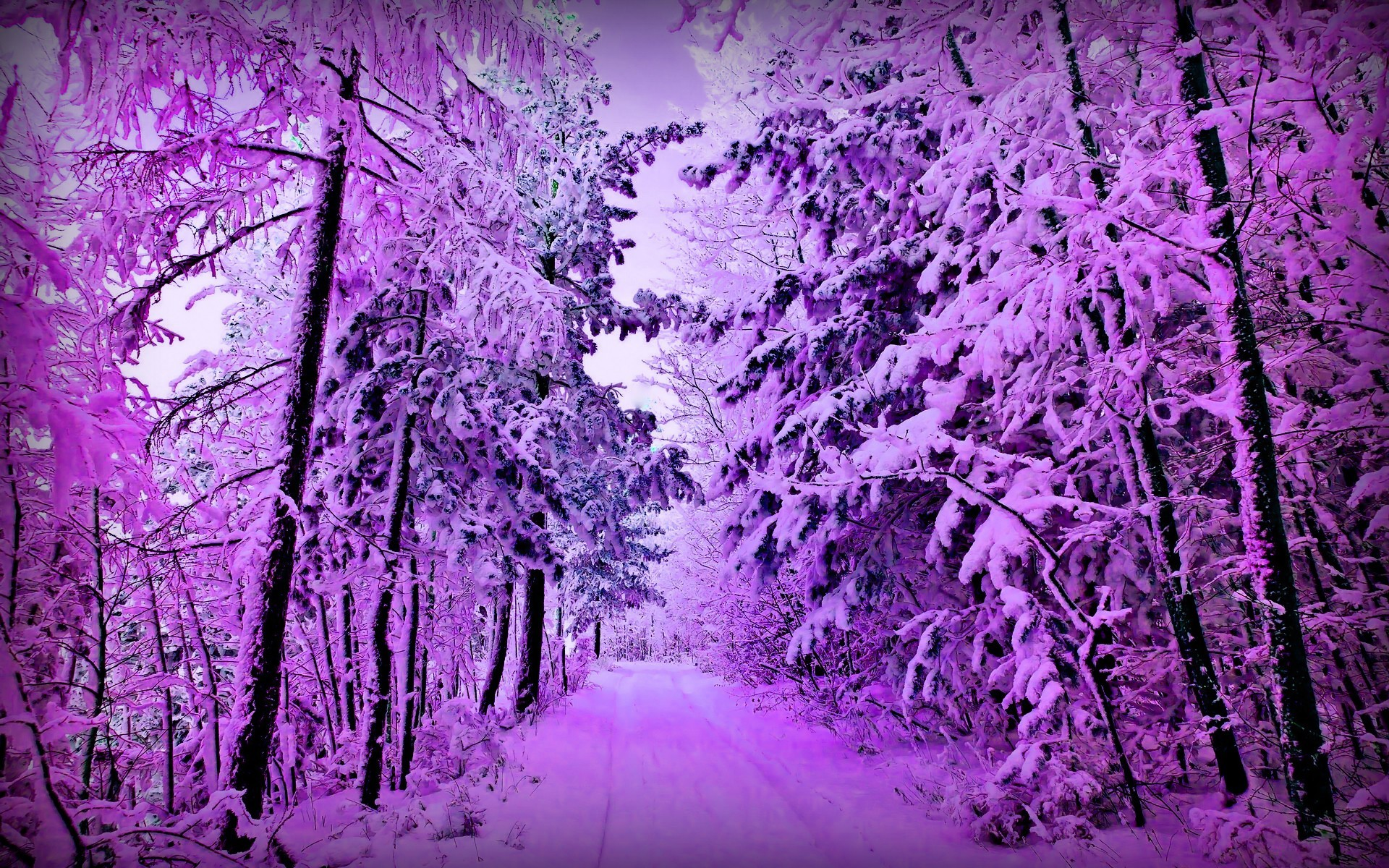 Res: 1920x1200, Nature Path Trees Forest Beautiful Snow Snowy Purple Beauty Winter Tropical  Desktop Wallpaper -