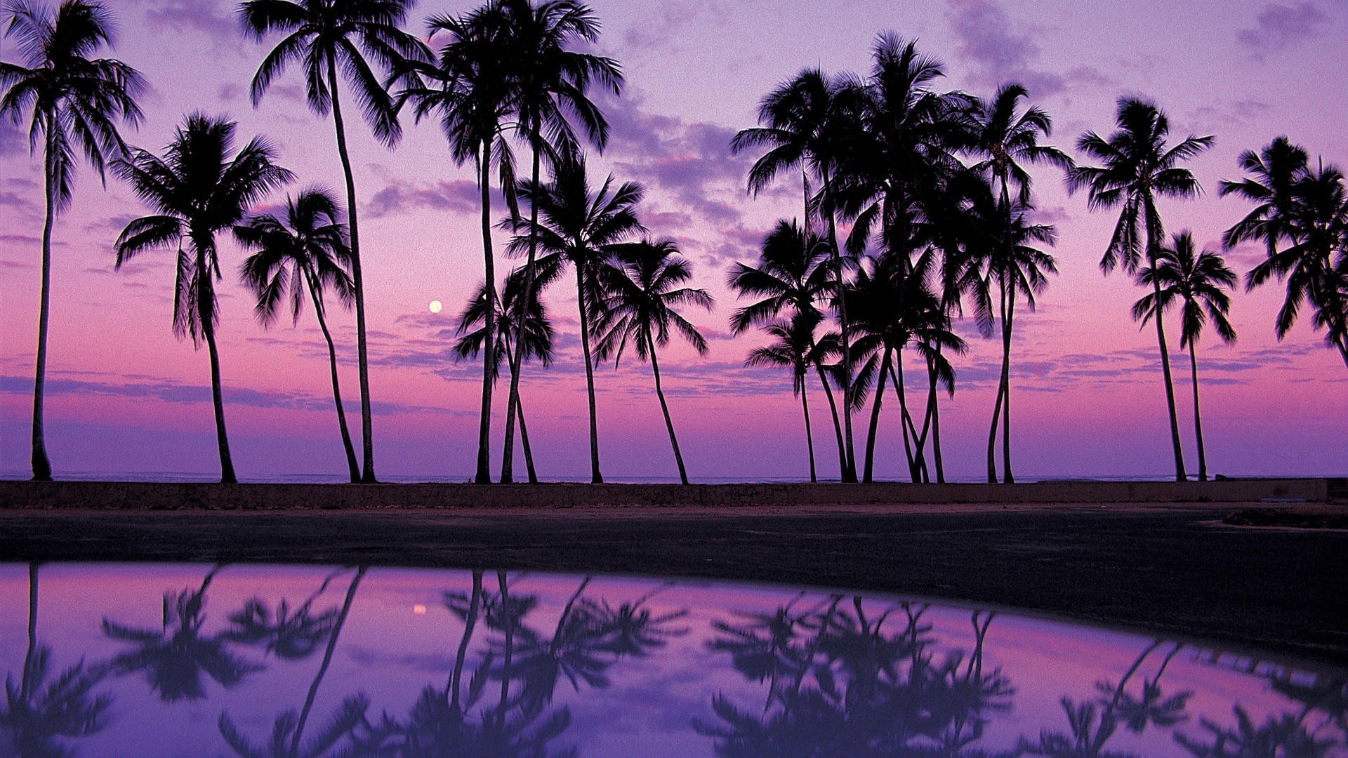Res: 1920x1080, Palm Tree Wallpapers 5 - 1920 X 1080