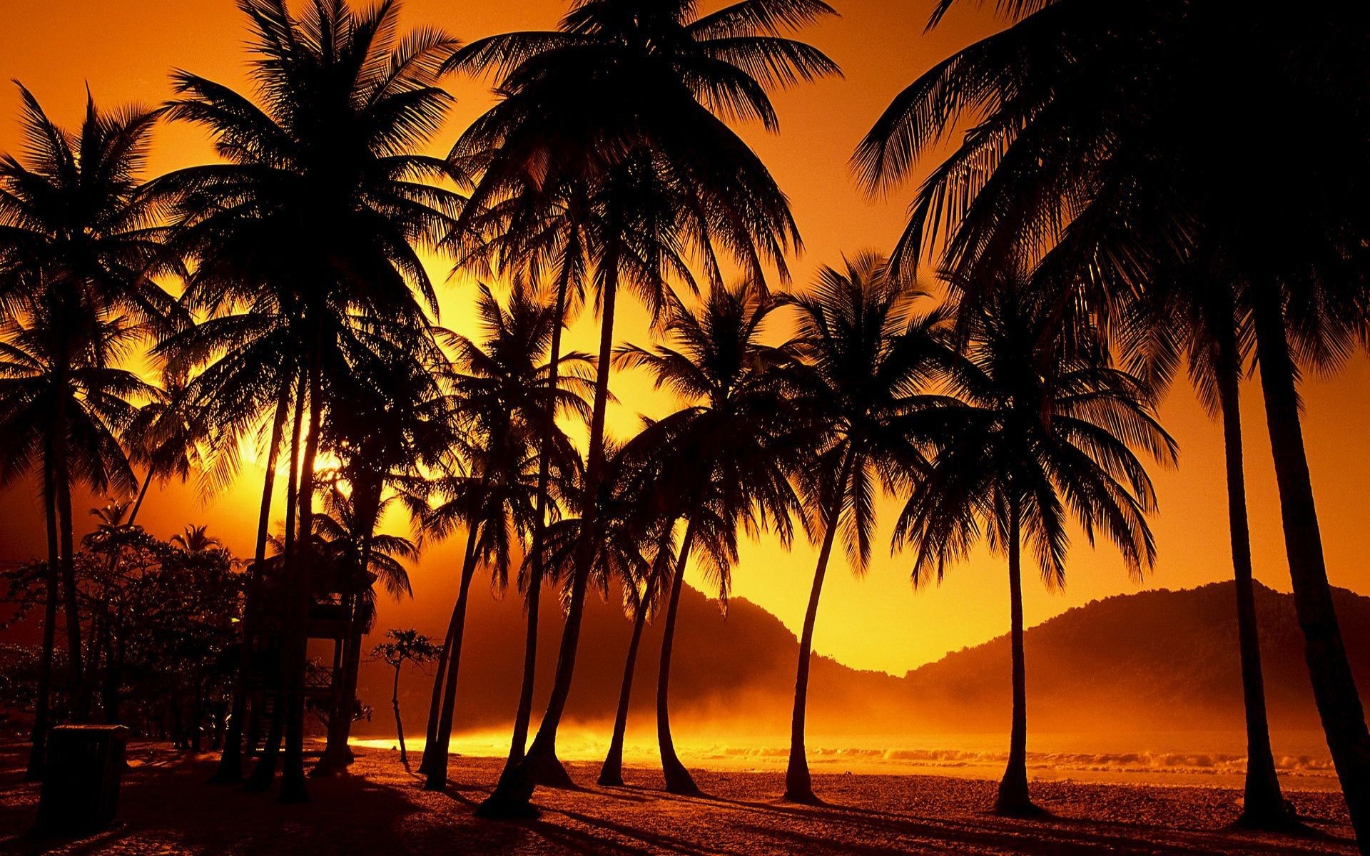 Res: 1920x1200, Purple Tree Wallpapers Wallpaper 1920×1200 Palm Trees Wallpaper (42  Wallpapers) | Adorable