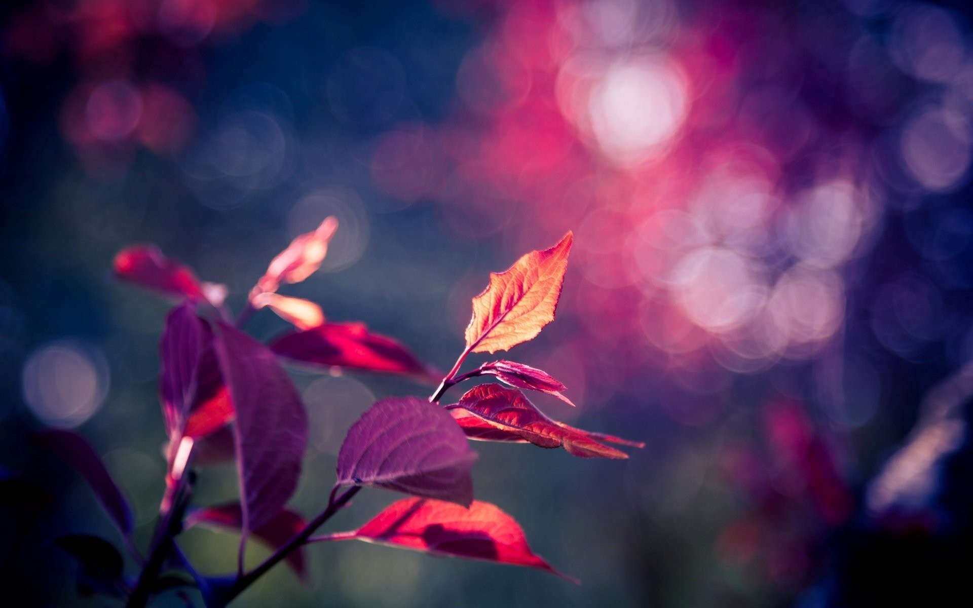 Res: 1920x1200, close up leaf leaves pink purple tree blur bokeh background wallpaper  widescreen full screen hd wallpapers