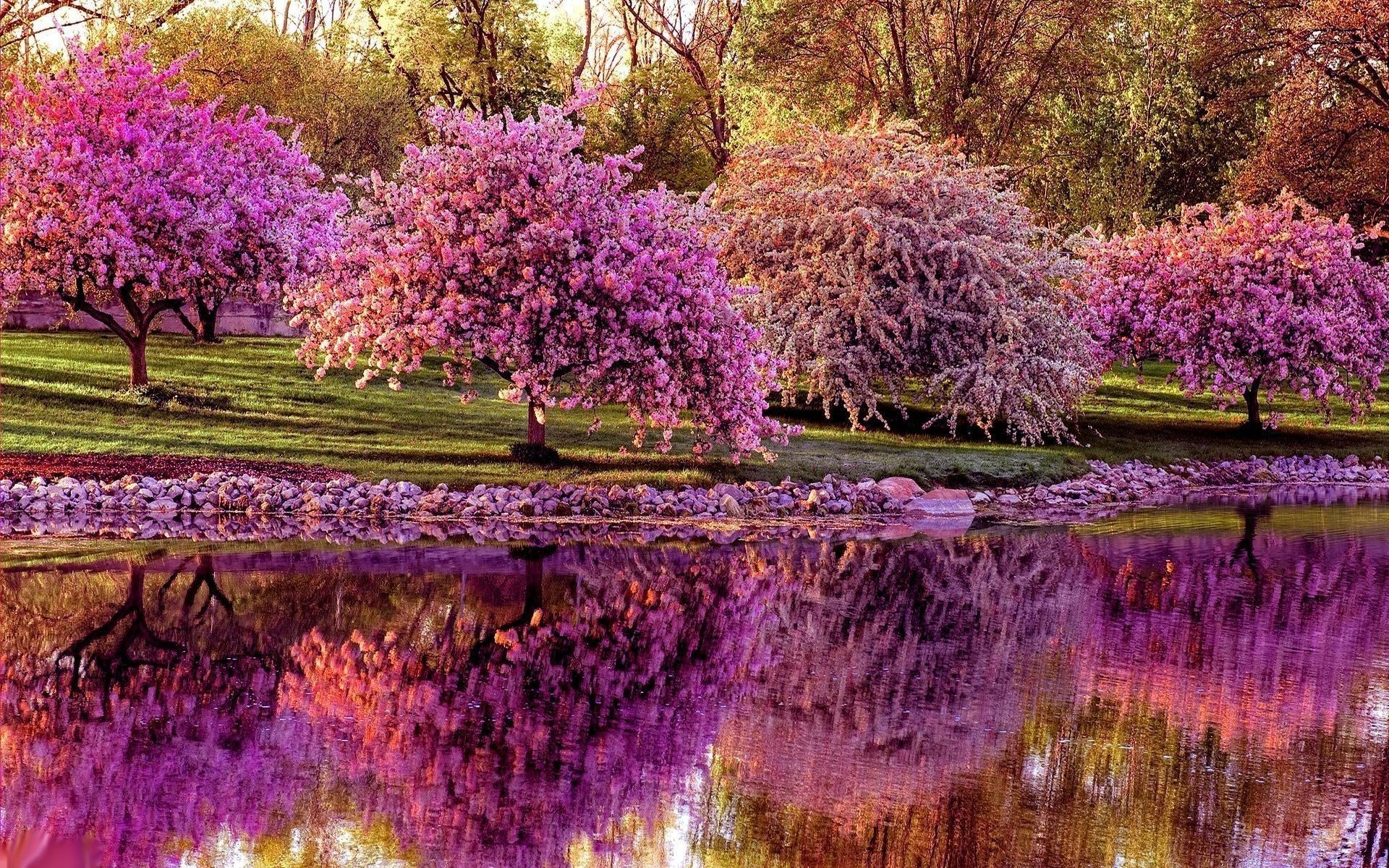 Res: 1920x1200, Spring Garden Desktop Wallpapers ~ Toptenpack.com