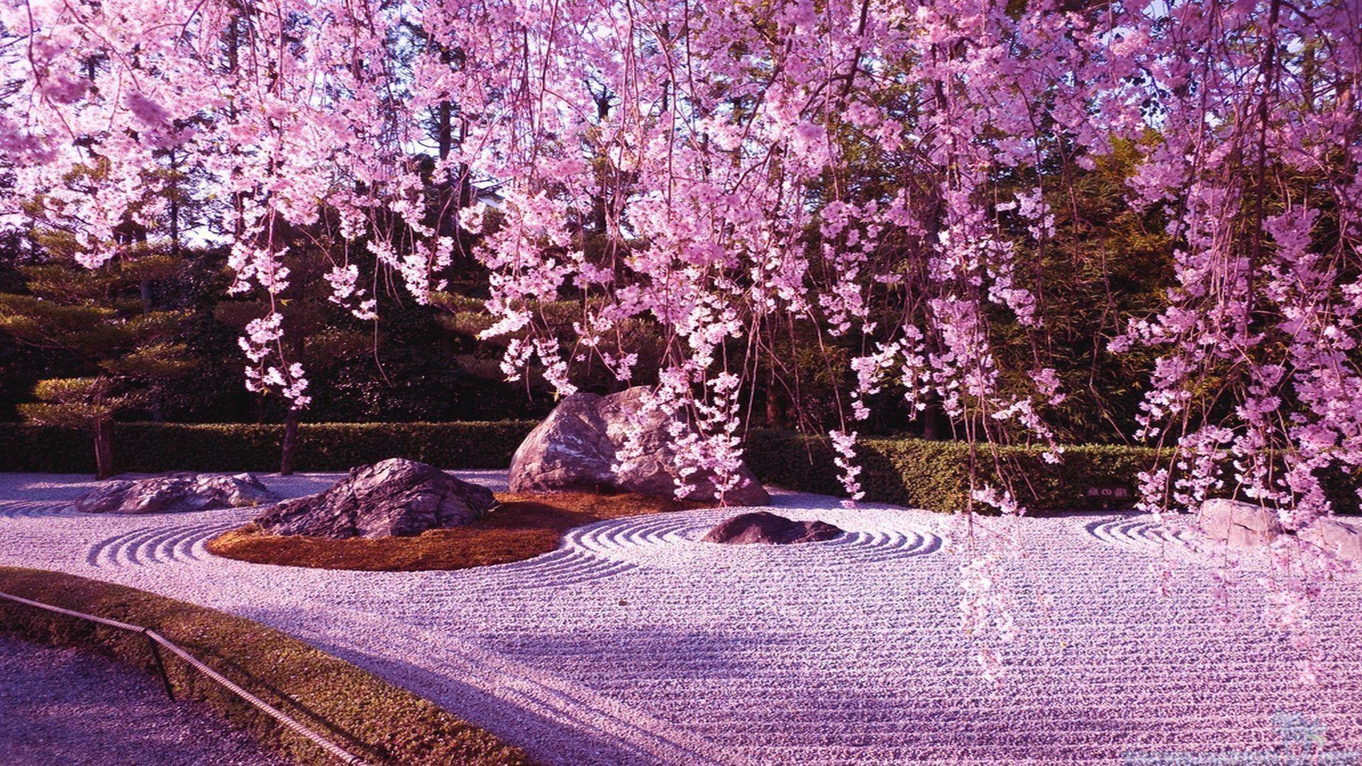 Res: 1920x1080, Cherry Blossom Tree Wallpaper 18