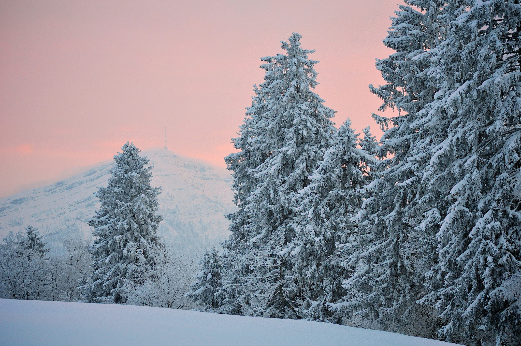 Res: 2048x1360, Blue Spruce Winter Snow Desktop Wallpaper Uploaded by DesktopWalls
