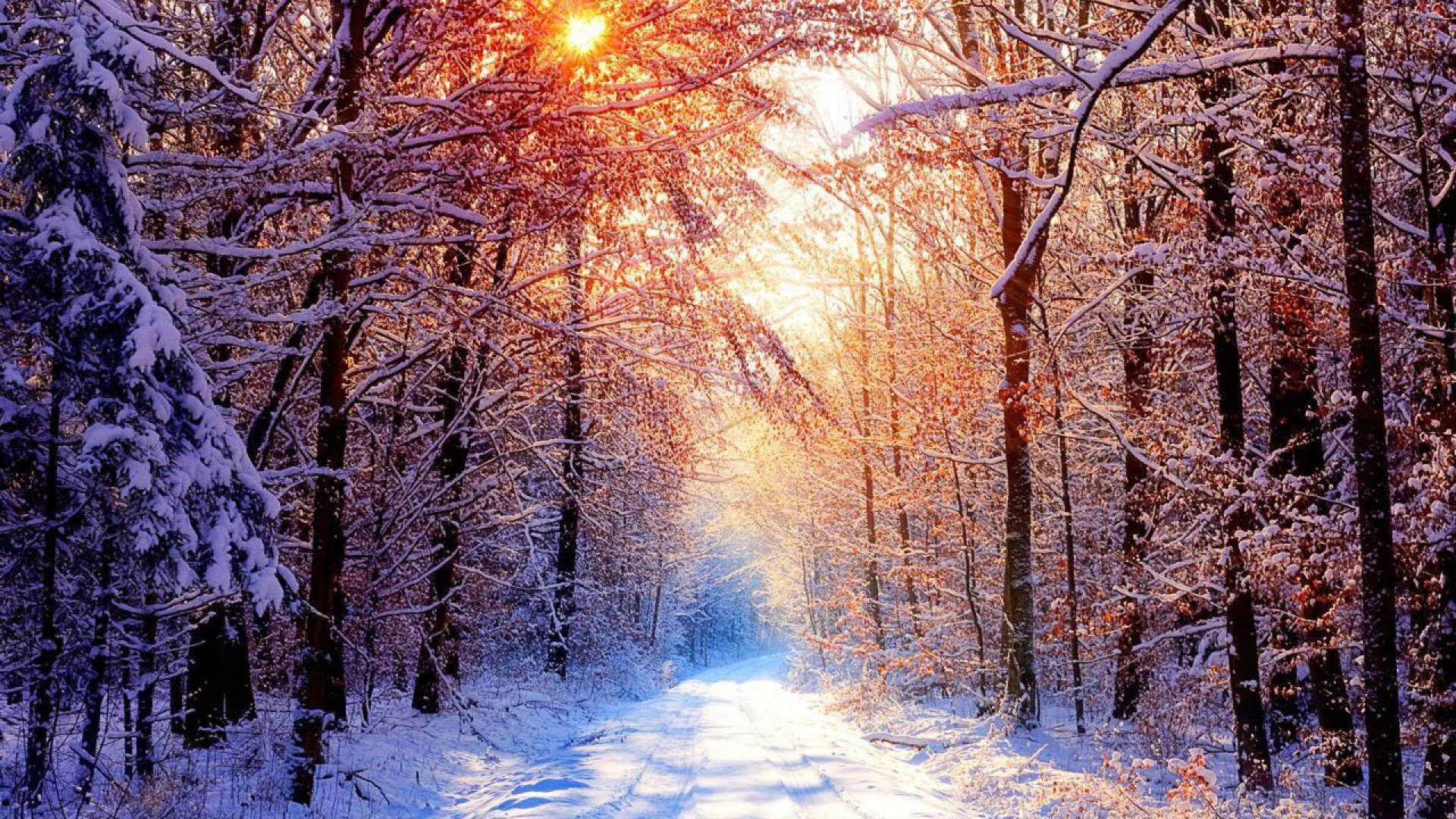 Res: 1920x1080, Like or share Creek Winter Forest Wallpapers X Winter Snowy Forest .