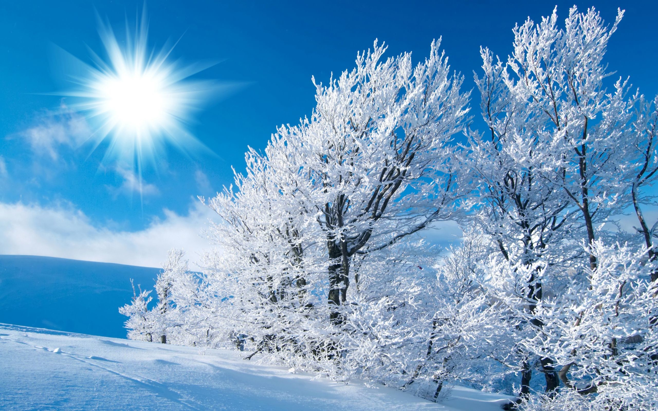 Res: 2560x1600, Winter Scenes | Winter Wallpaper,Snow hd Wallpaper For Desktop,Scene  wallpapers#403