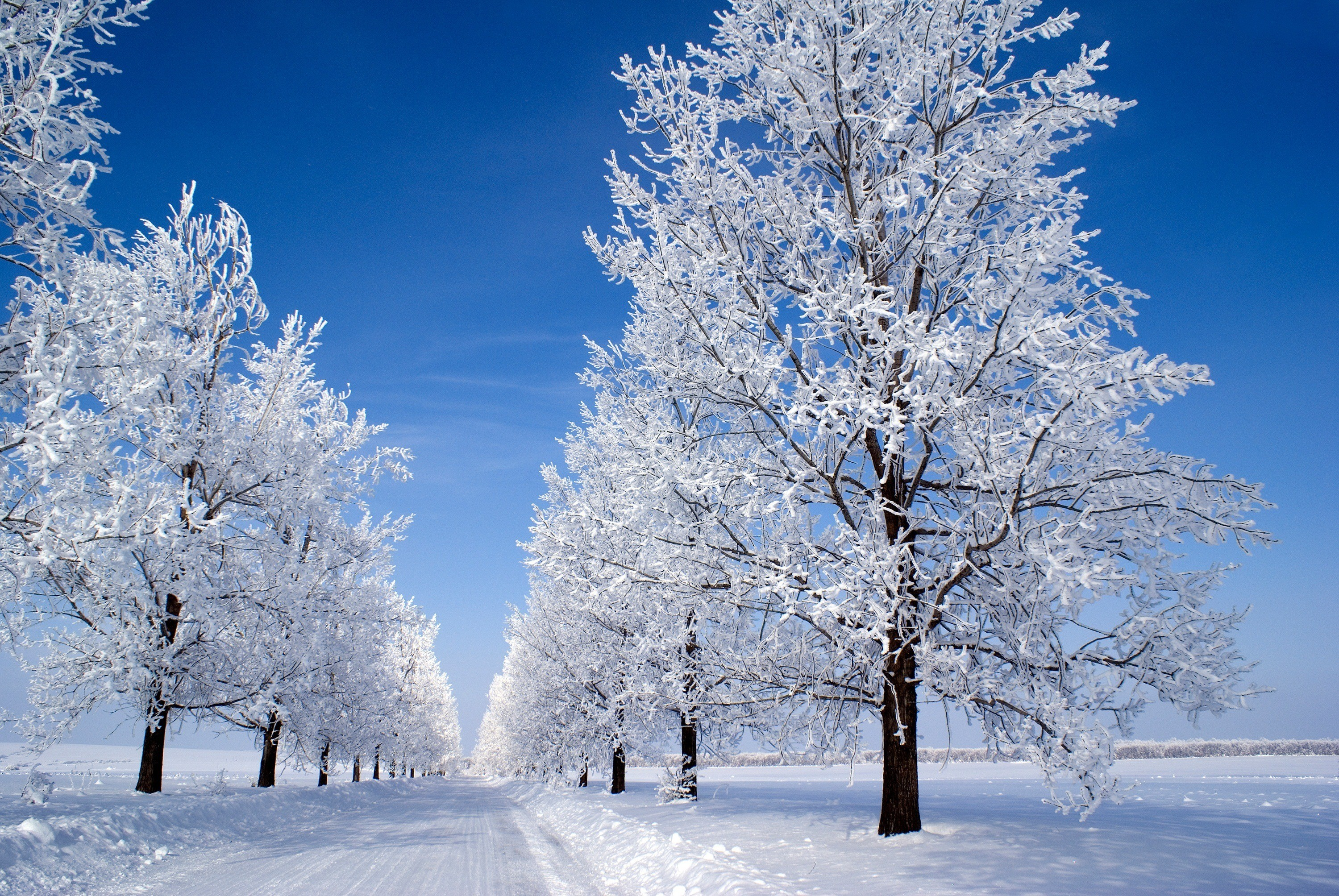 Res: 3000x2008, Snow Winter Trees. | winter snow trees HD wallpaper ...