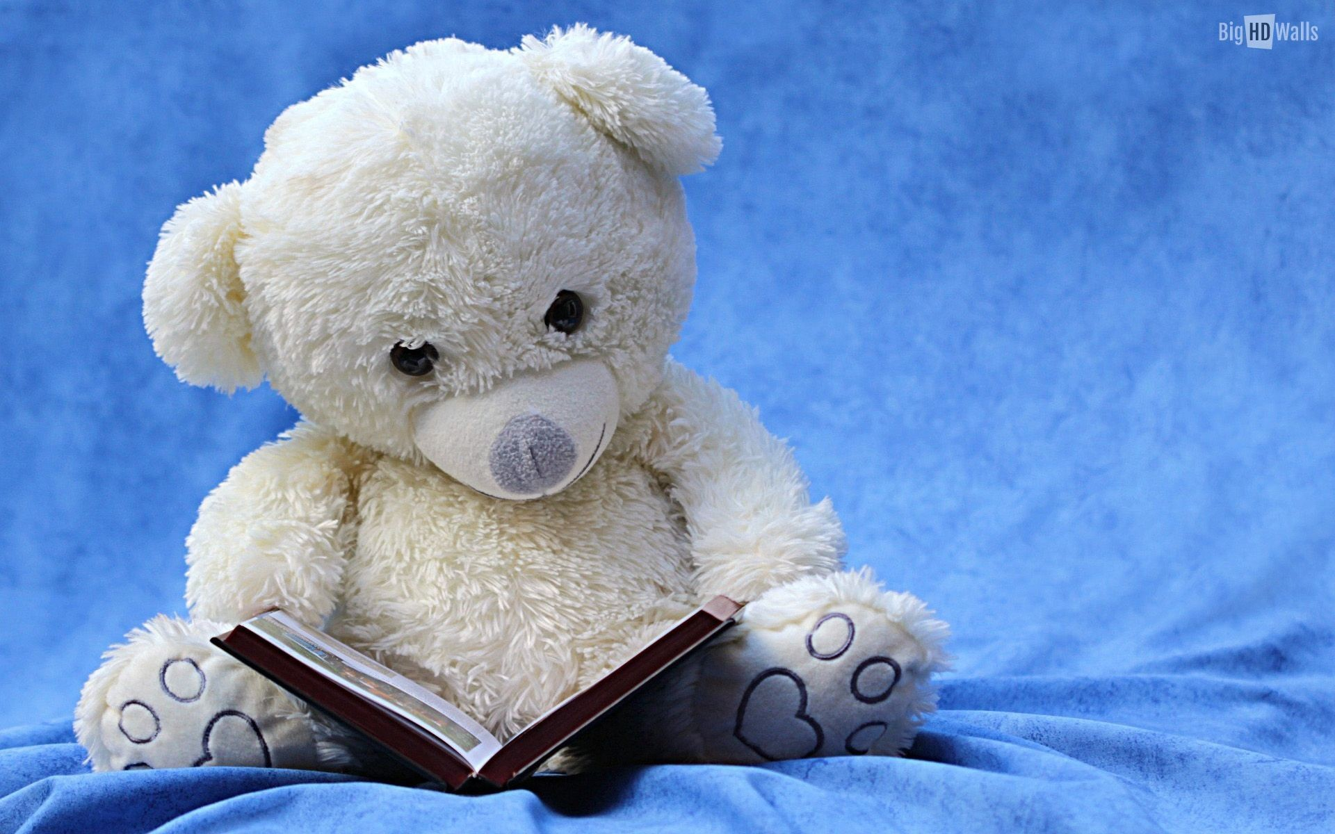 Res: 1920x1200, Amazing Cute Teddy Bear Wallpaper for PC & Mac, Laptop, Tablet, Mobile Phone