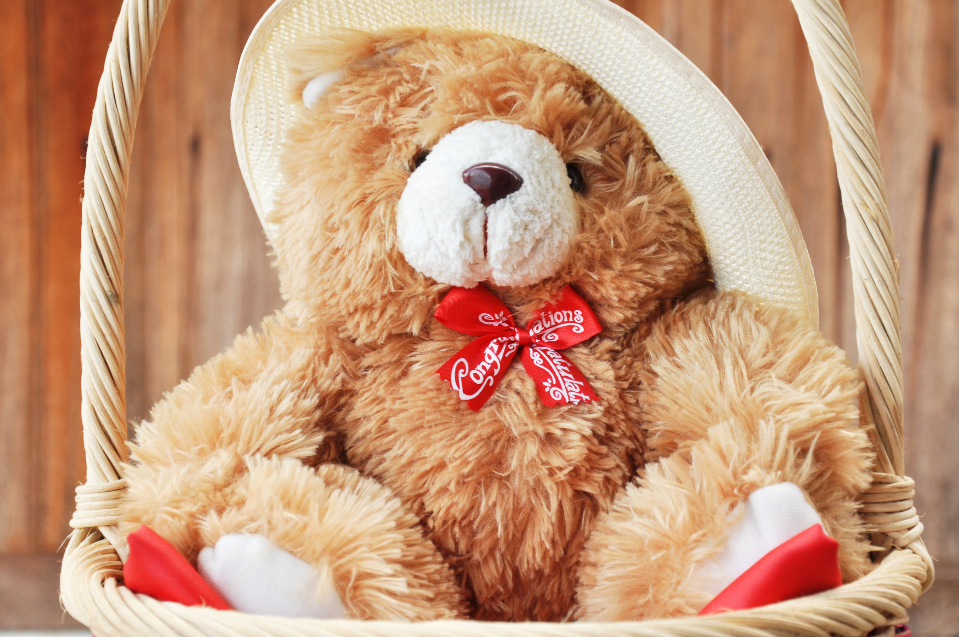 Res: 1920x1275, Full HD Teddy Bear Wallpapers